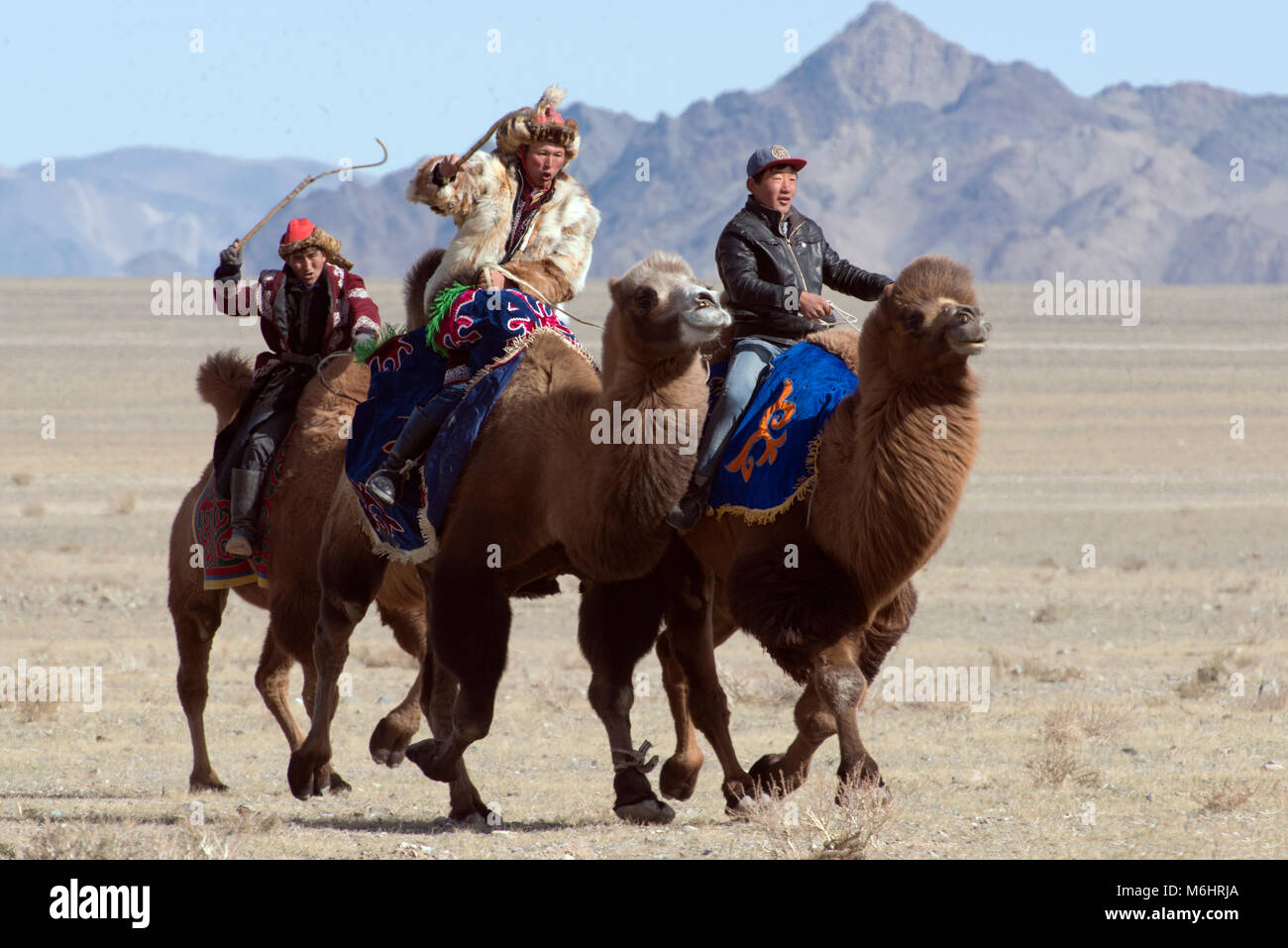 Kazakh men compete in a camel race at the 2017 golden eagle festival in Olgii, western Mongolia. - Stock Image