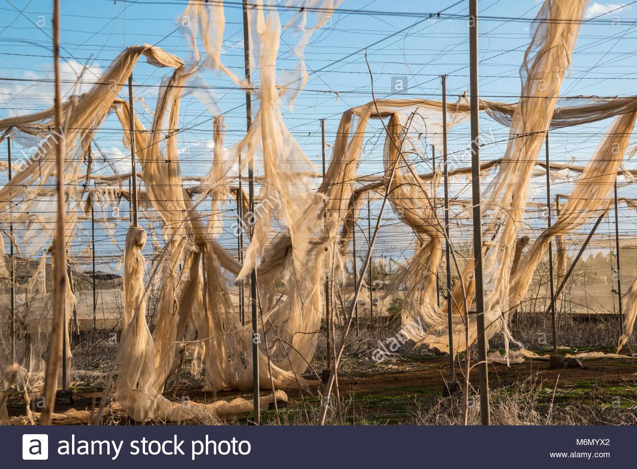 abandoned-banana-plantations-near-alcala