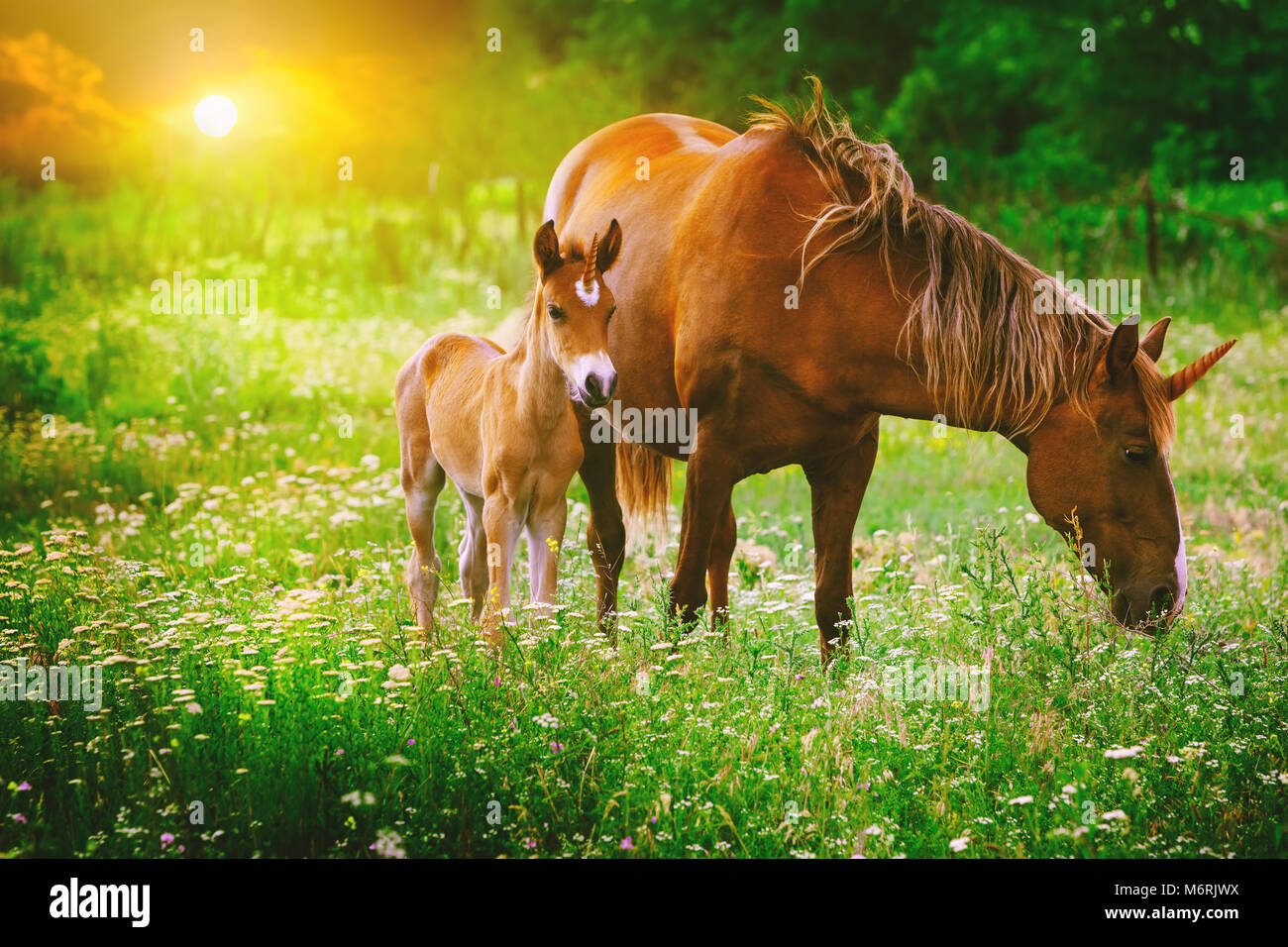 Beautiful unicorns Mare and Foal in the magical forest landscape at sunset, realistic picture. Unicorn mother and - Stock Image