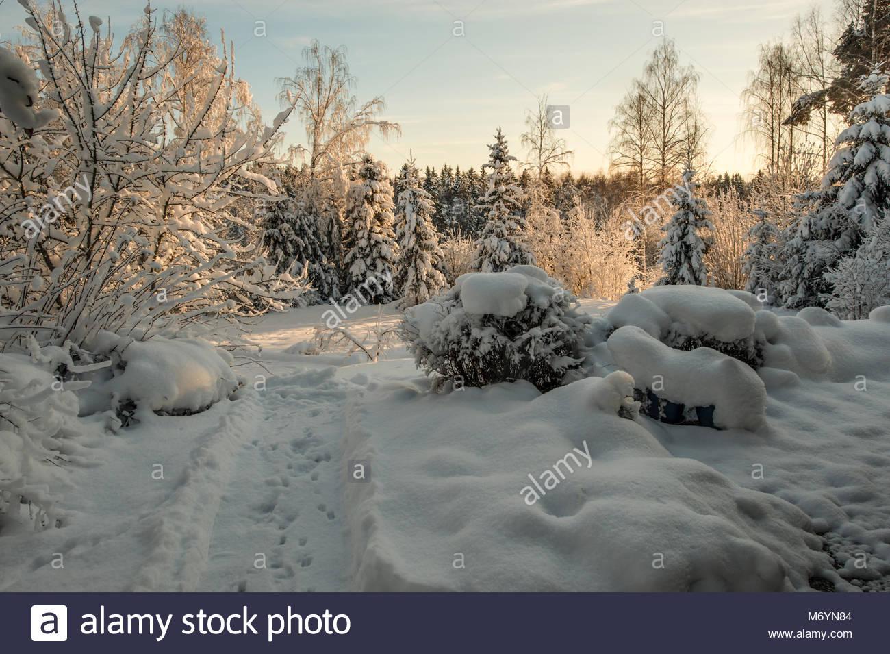 Winter wonderland in Roslagen, Sweden. Designer garden in winter in Sweden. Very heavy snow on the trees. - Stock Image