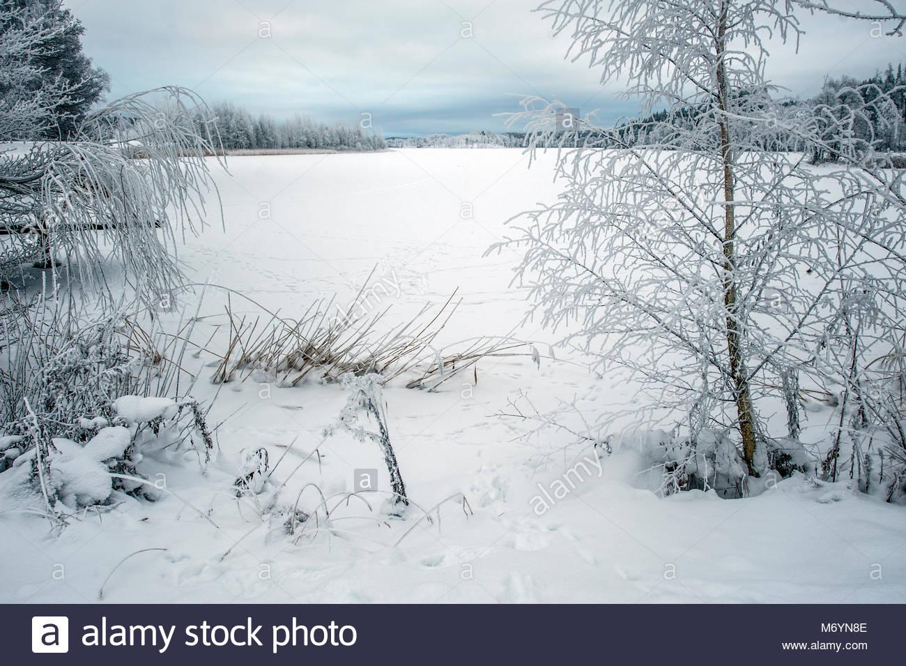 Winter wonderland in Sweden - Stock Image