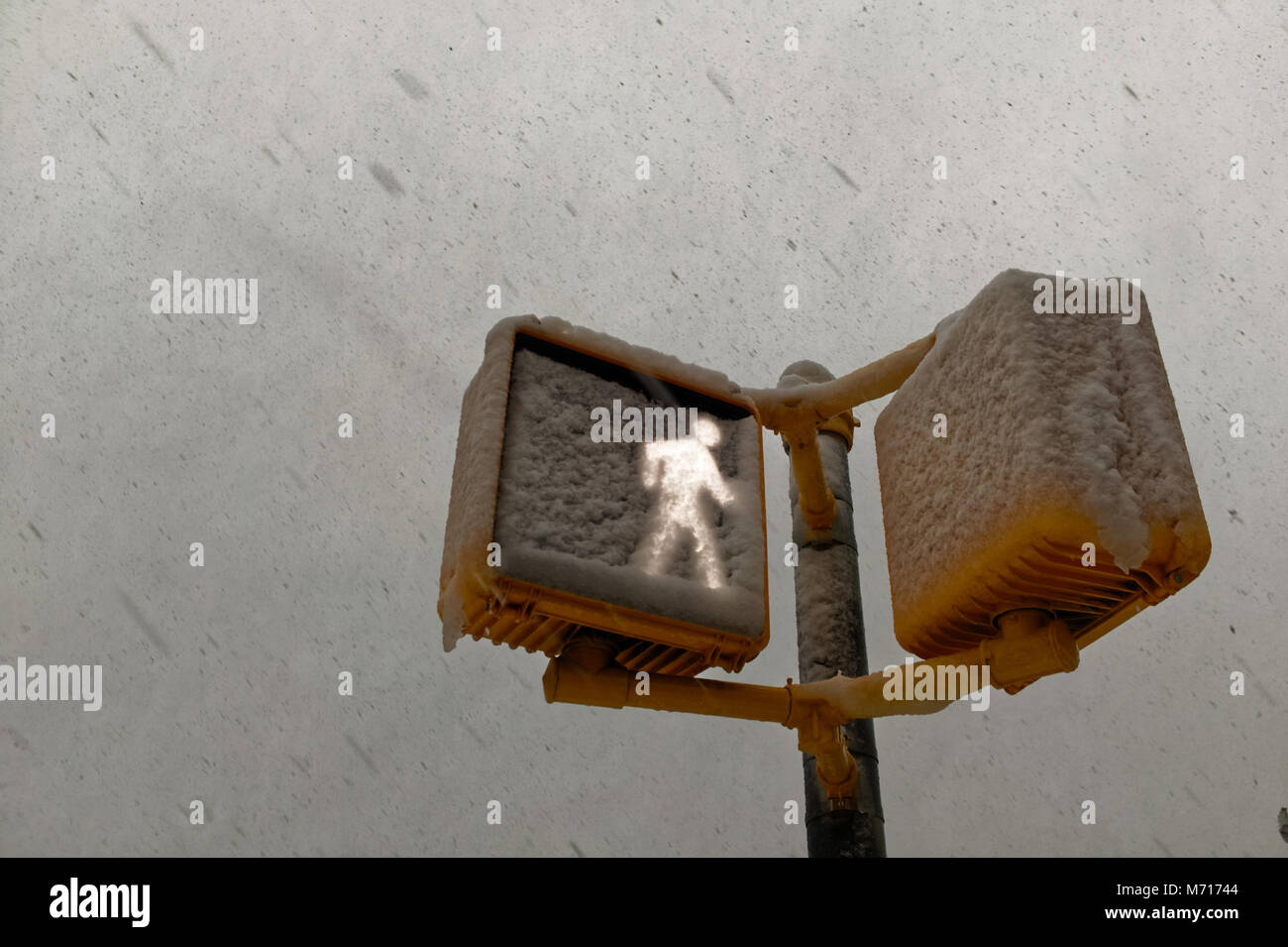 Brooklyn, USA. 7th March, 2018. Crossing signal covered in snow during the Nor'easter of March 7th, 2018 in - Stock Image