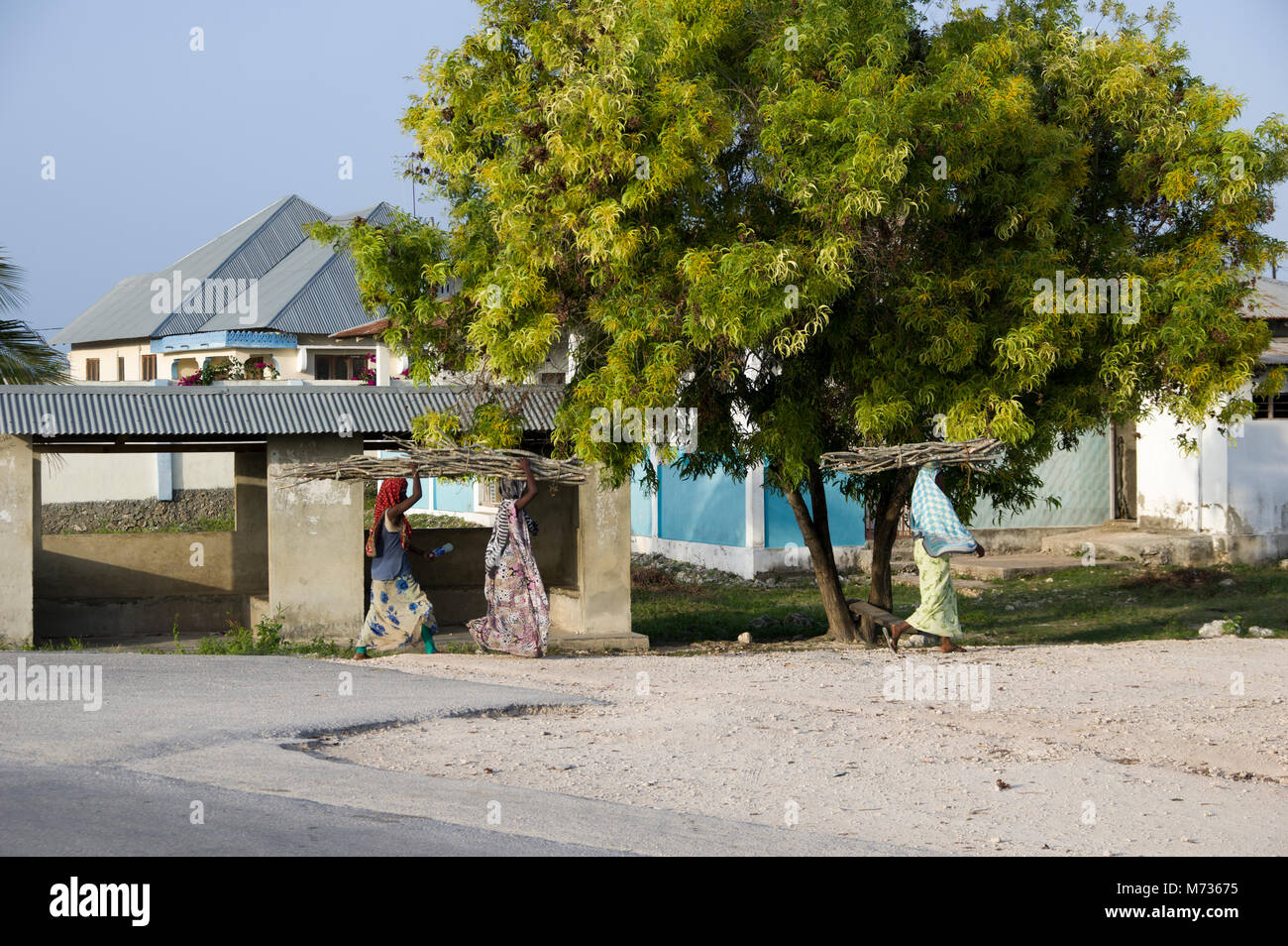 Swahili women walking with faggots of sticks on their heads past a large green tree and traditional zanzibar houses - Stock Image