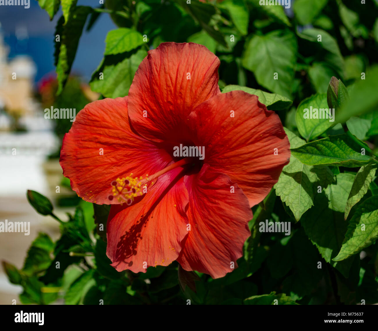 Cool hawaiian word for beautiful flower contemporary wedding and cute hawaiian word for beautiful flower pictures inspiration izmirmasajfo Gallery