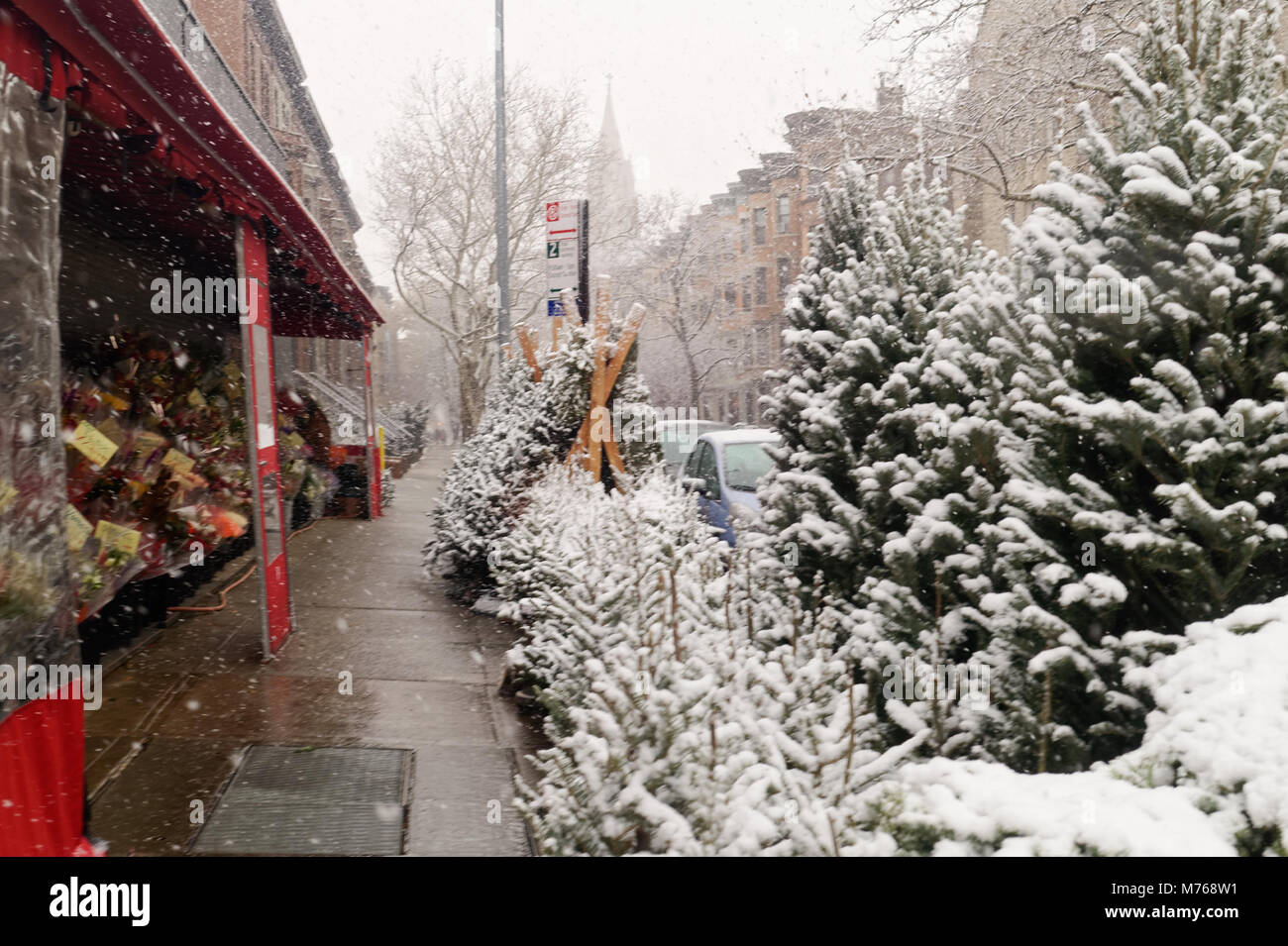 Snow covered Christmas trees for sale at a deli lined up on a Brooklyn sidewalk during a light snowfall. - Stock Image