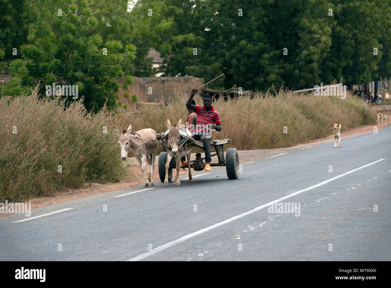 Men riding a donkey cart along the road. Mopti Region, Mali, West Africa. - Stock Image
