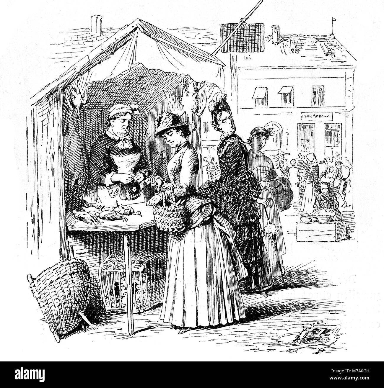 young woman shopping for poultry at the city market, vintage engraving - Stock Image