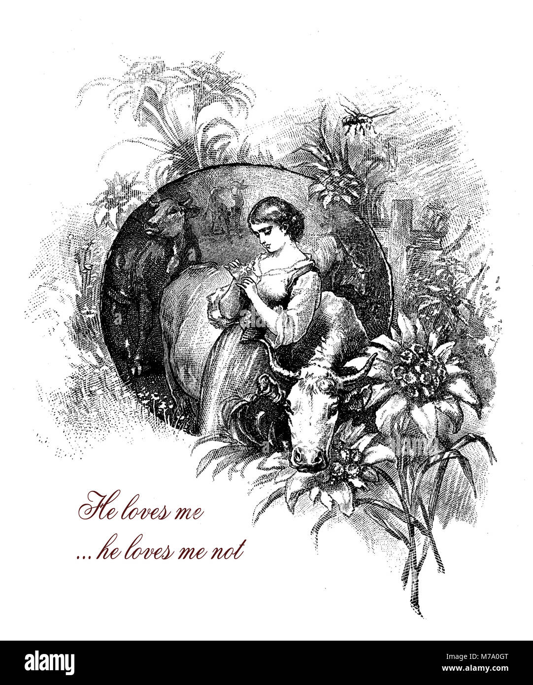 He loves me...he loves me not, girl with edelweiss, romantic vintage engraving - Stock Image