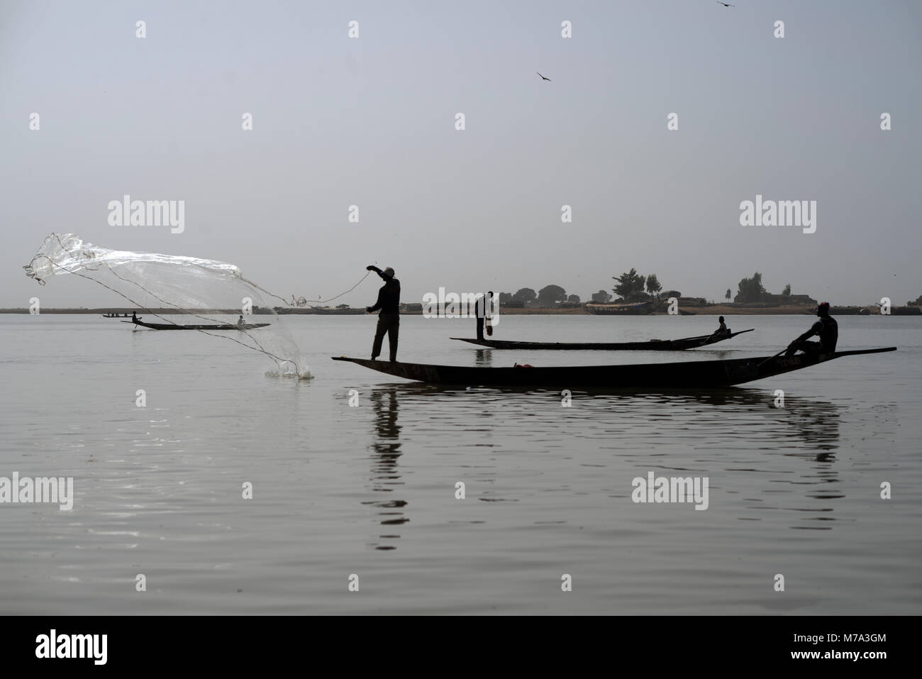 A fisherman casts his net while standing in his boat on the River Niger. Mopti, Mali, West Africa. - Stock Image