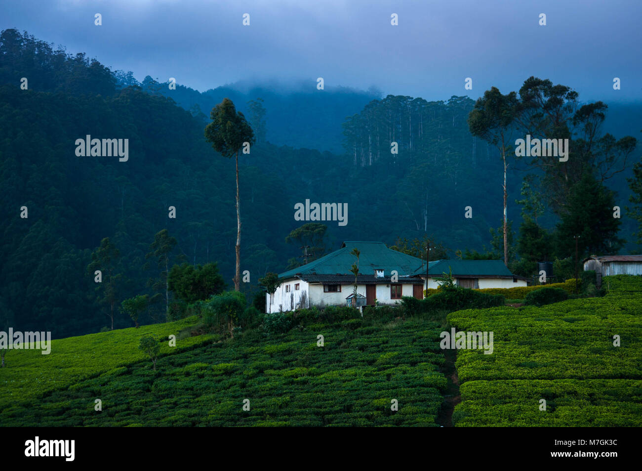 White villa in tea plantation at night Stock Photo