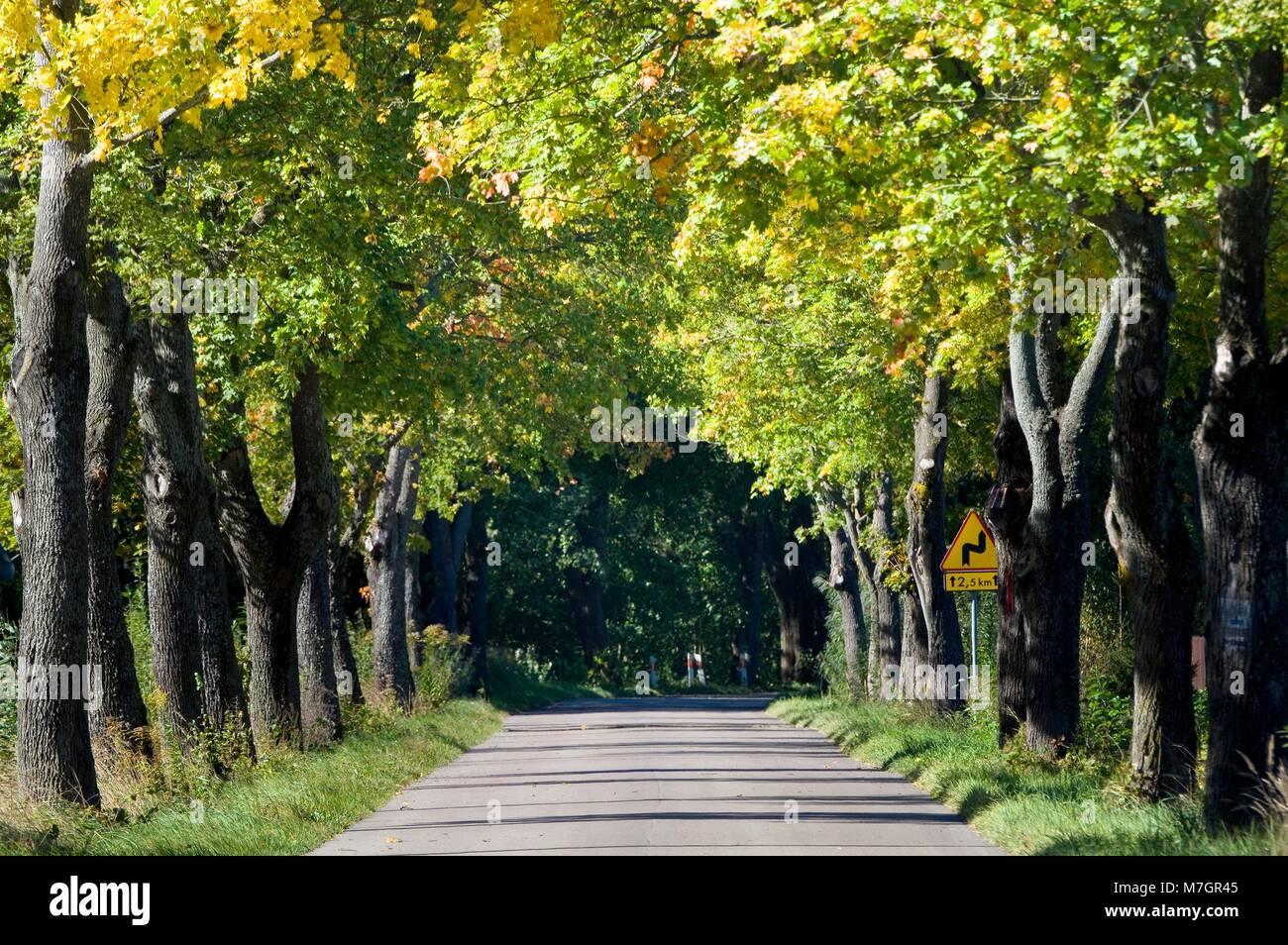 Tree Tunnel Autumn Stock Photos & Tree Tunnel Autumn Stock Images ...