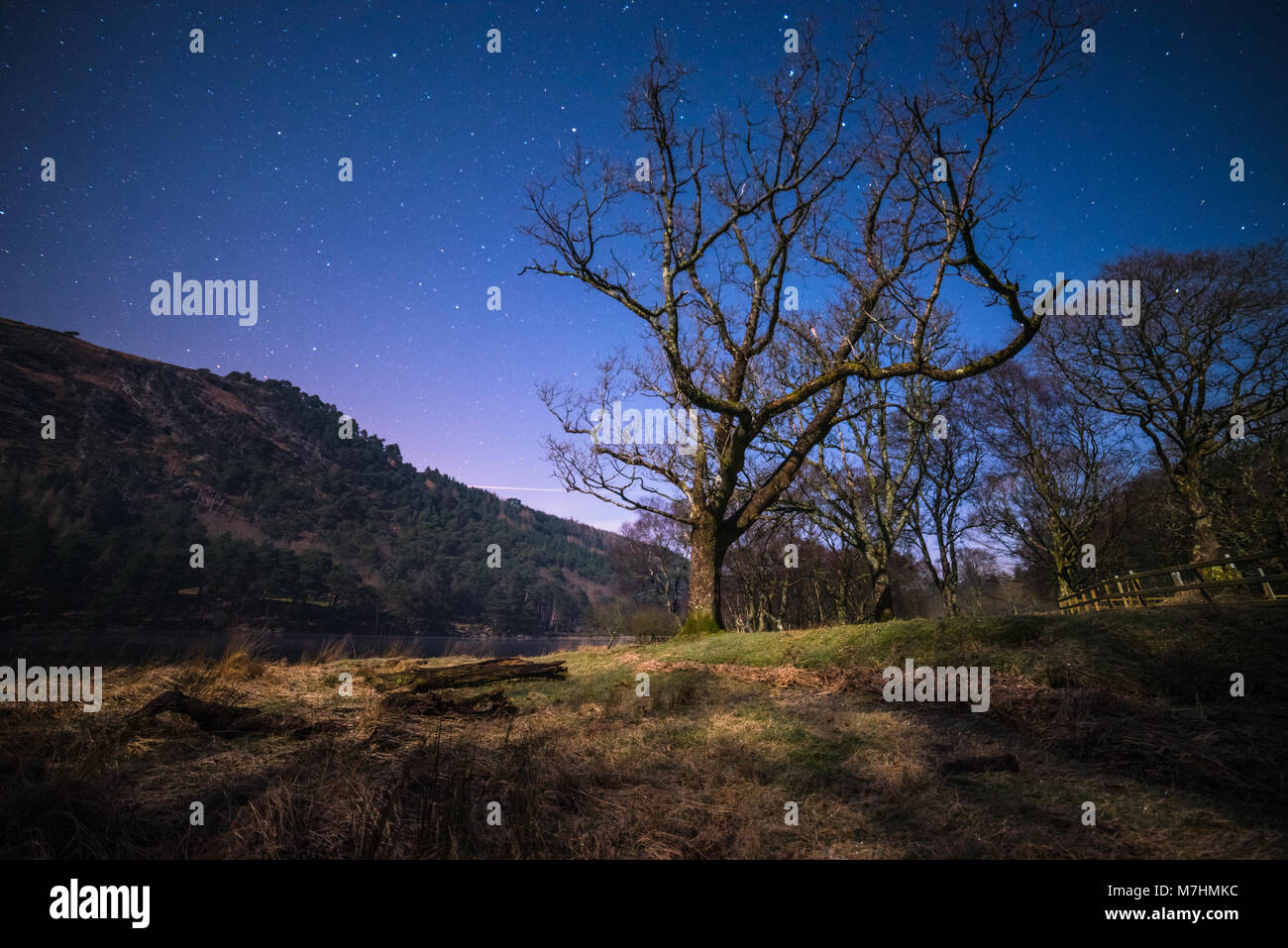 Tree at the night in mountains - Stock Image