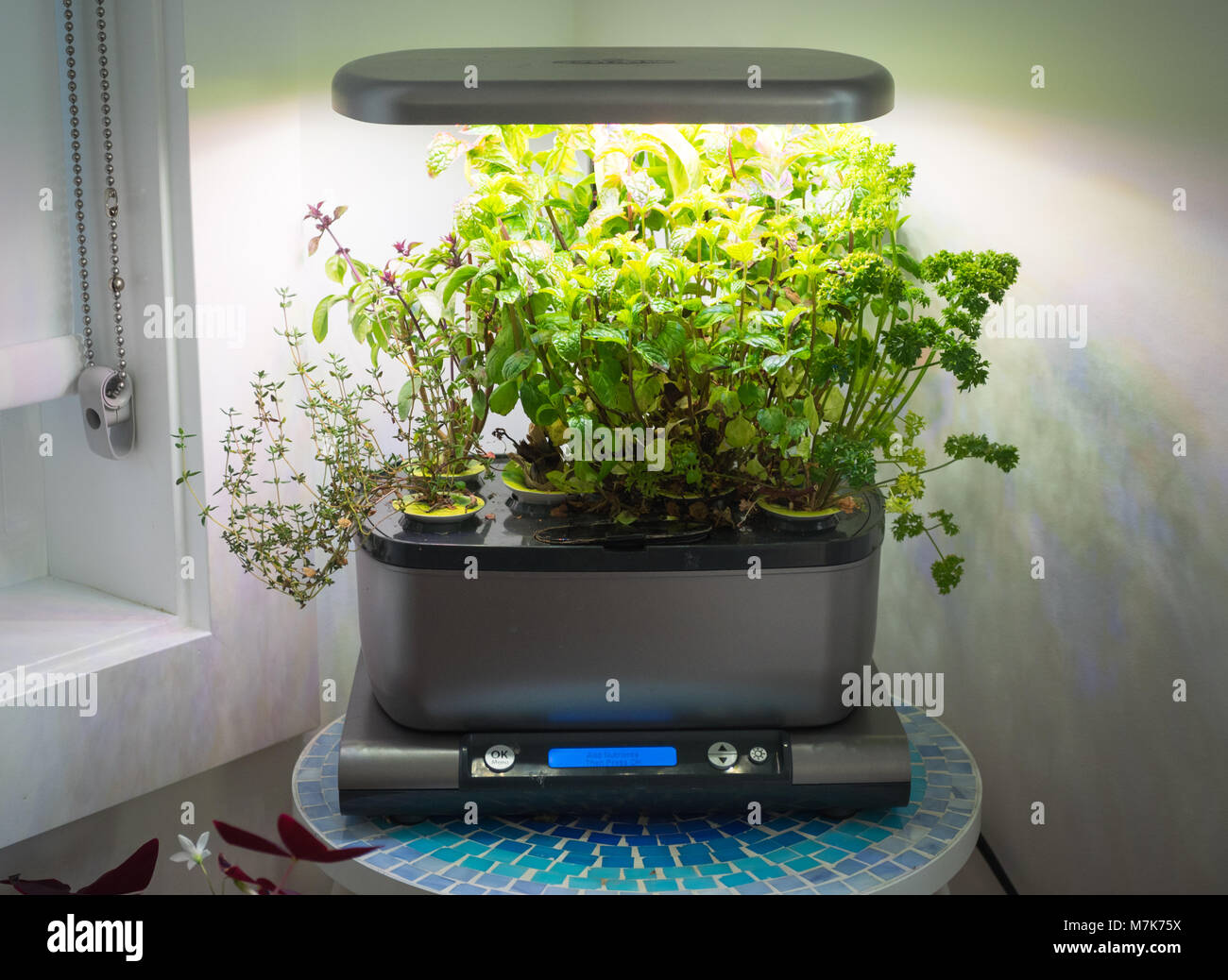 An Miracle-Gro AeroGarden, a popular home indoor garden that uses hydroponics to grow herbs and vegetables. - Stock Image