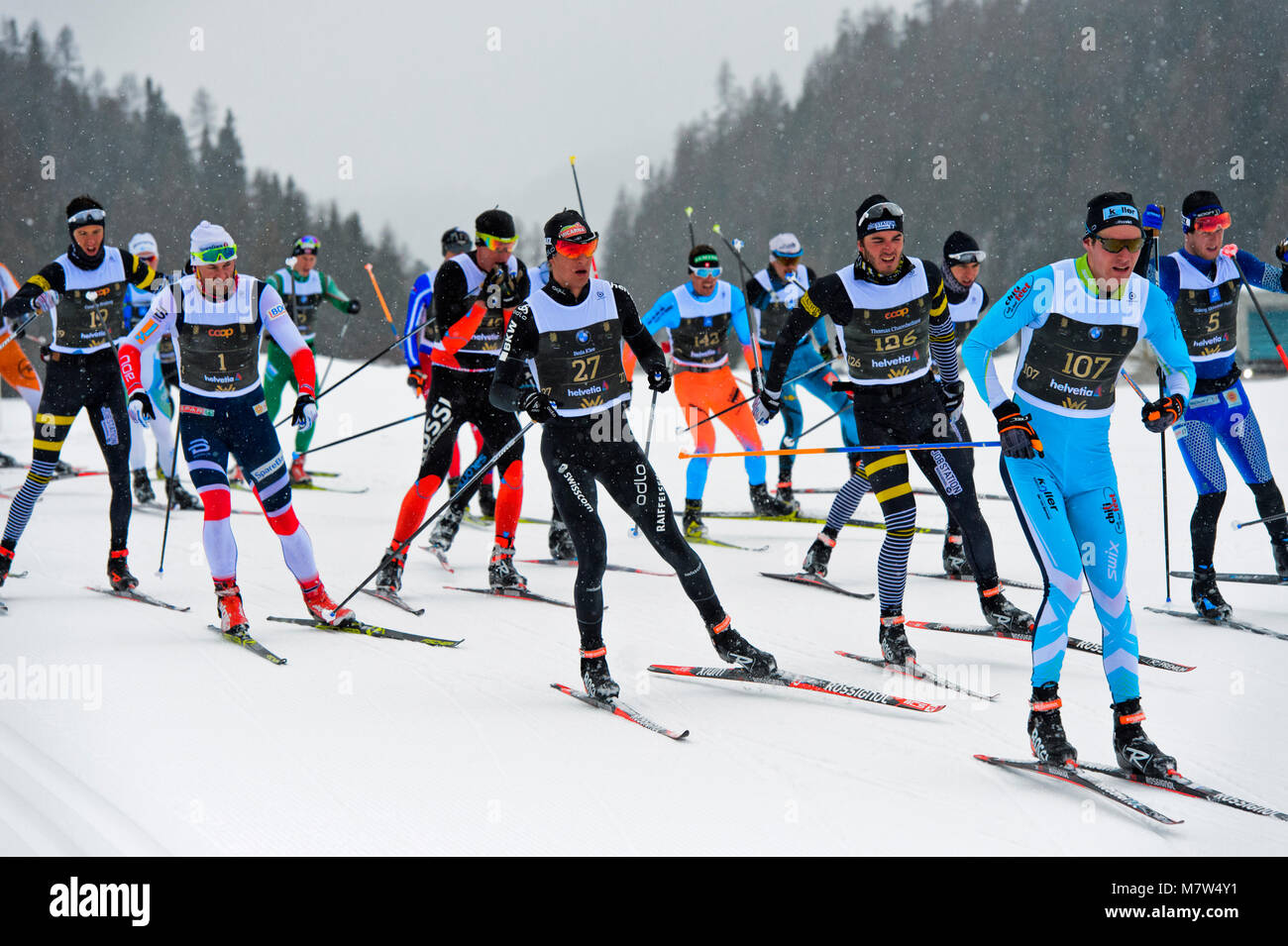 Cross country skier  Petter Northug, Norway, number 1, and other cross country skiers at the 50th Engadin Skimarathon, - Stock Image