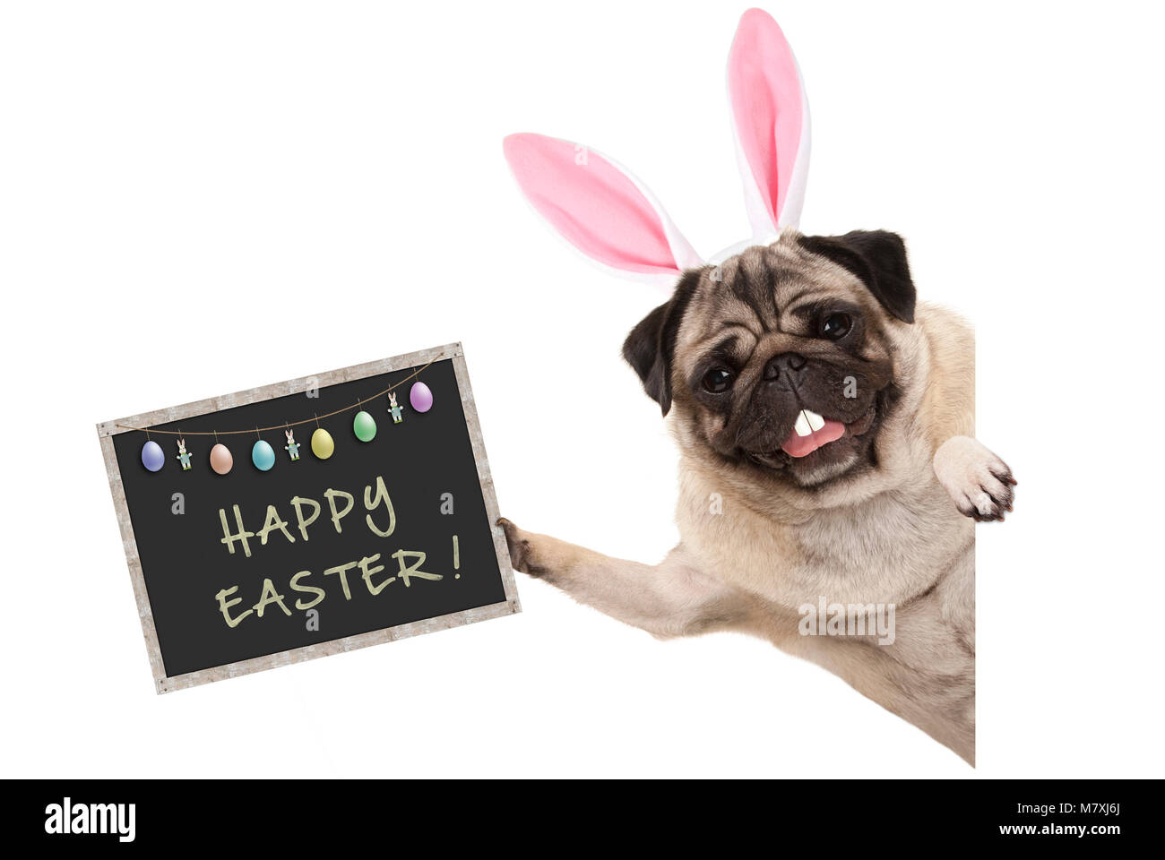 Easter bunny pug puppy dog with ears, eggs and blackboard with text happy easter, sideways from white banner - Stock Image