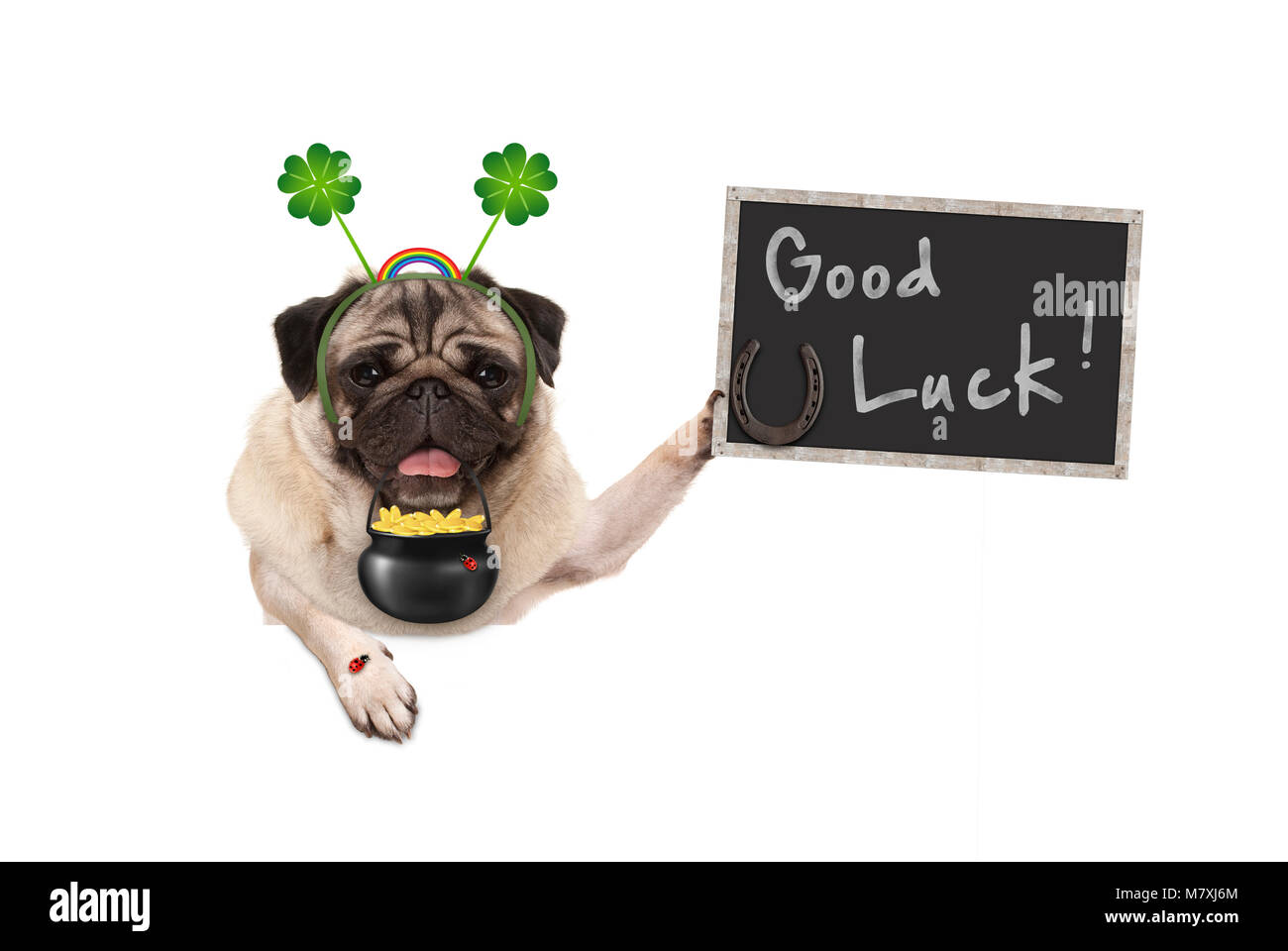Talisman pug puppy dog, with shamrock clover, golden coins, lady bug and horse shoe for good luck and success, isolated - Stock Image