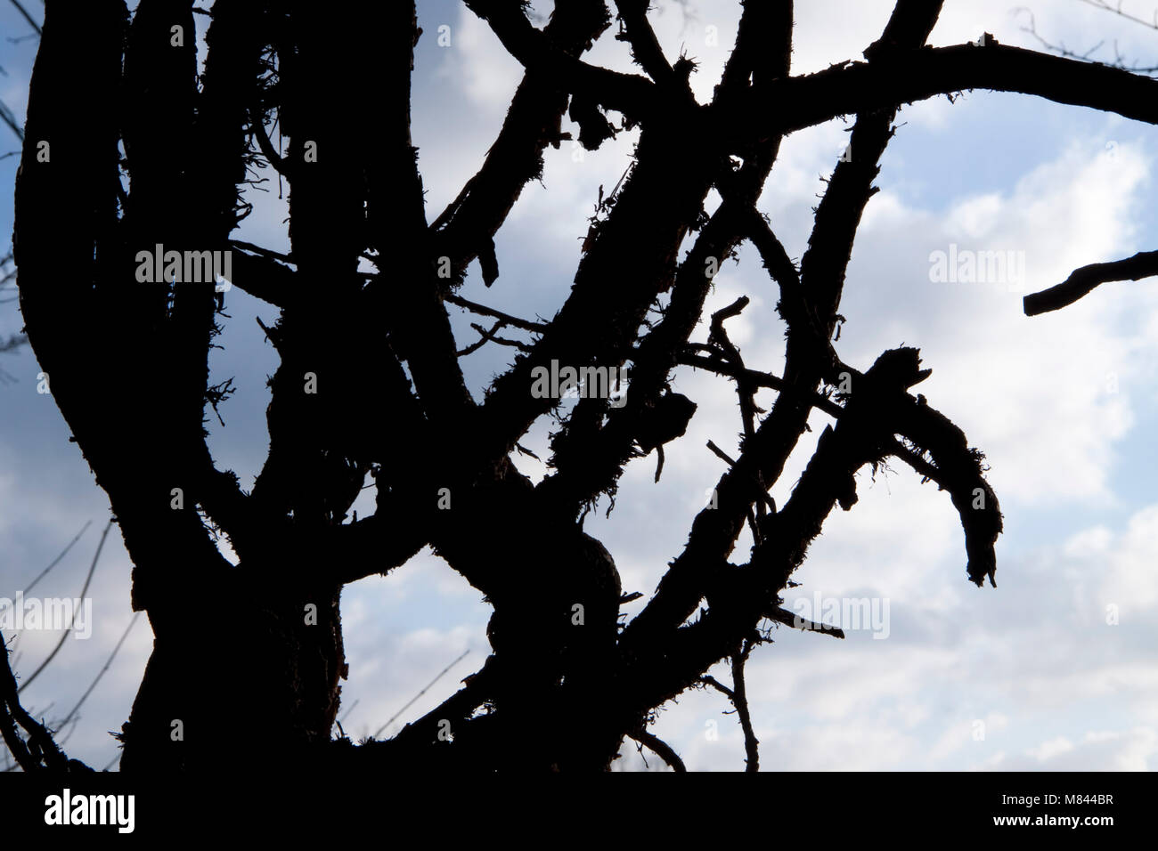 British countryside trees in silhouette - Stock Image
