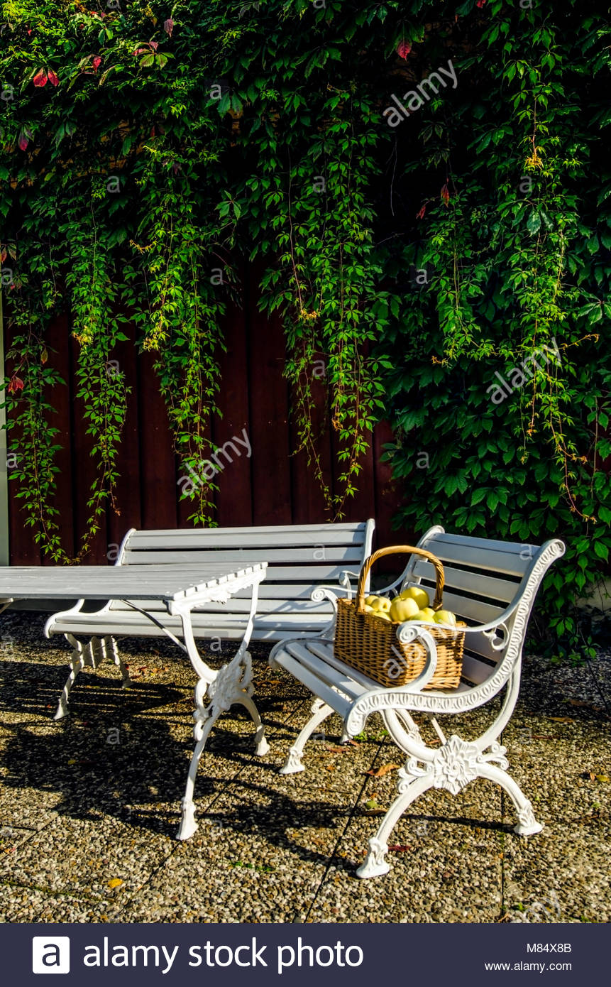 Healthy food, apples in wicker basket. Designer garden, white wooden furniture on the stone patio. Vines hanging - Stock Image