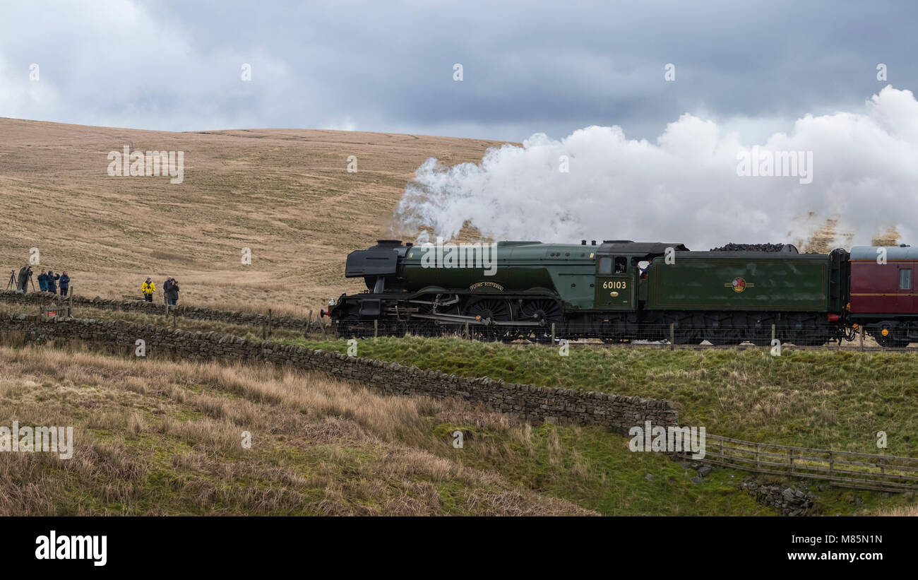 Puffing steam, iconic locomotive LNER class A3 60103 Flying Scotsman travels past rail fans - by Ribblehead Viaduct, - Stock Image