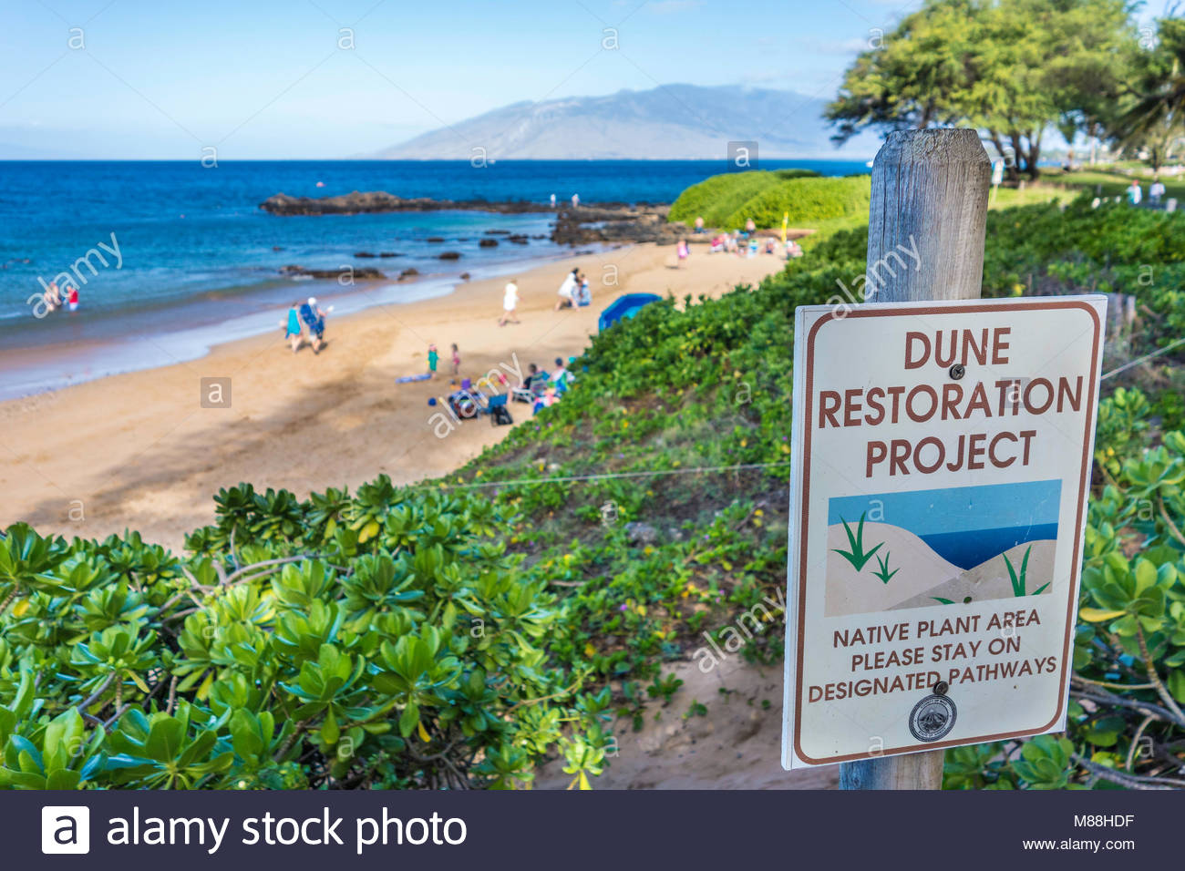 coastal-sand-dune-restoration-by-plantin