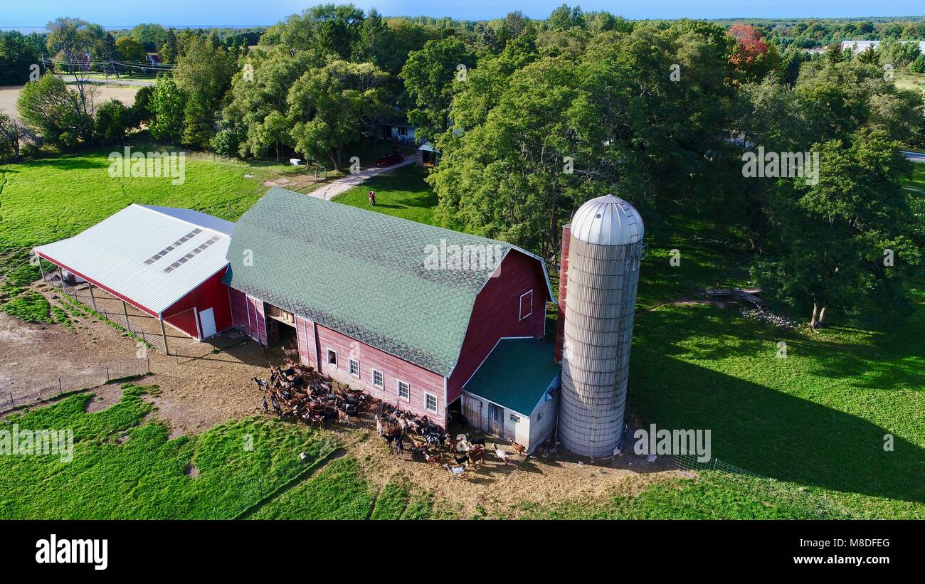 Aerial drone photograph of a barn, milking parlor and farmstead with a herd of milking goats in Door County, Sister - Stock Image