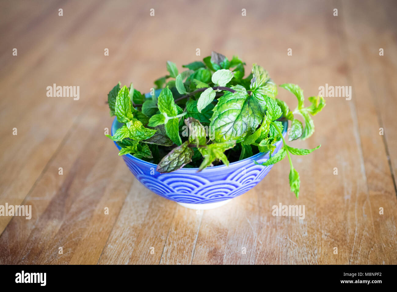 A bowl of freshly harvested peppermint leaves (Mentha × piperita) - Stock Image