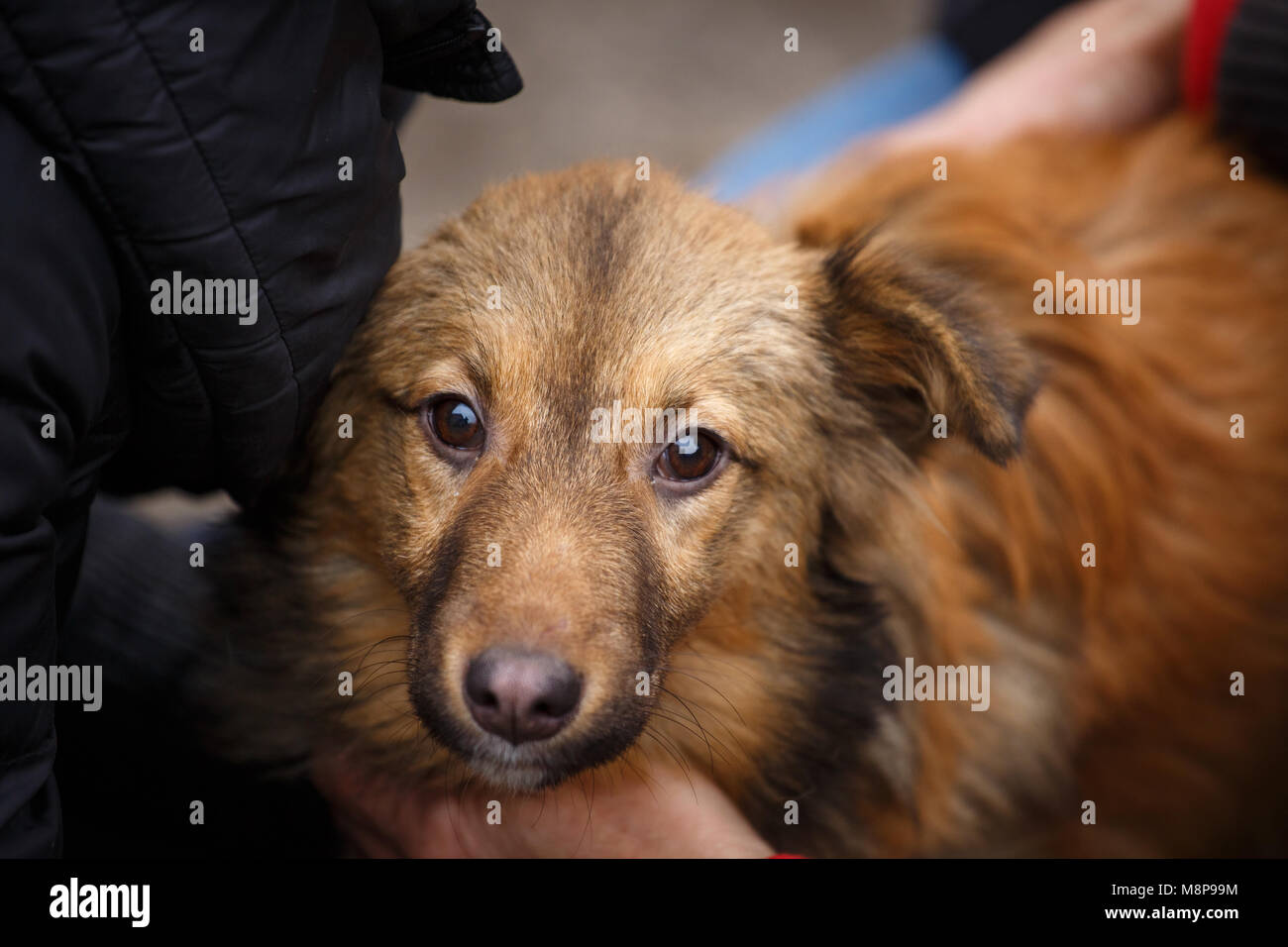 homeless animals Glenn greenwald needs your help today homeless people & animals together - [veja abaixo o vídeo e o texto em português] this project was conceived of, and is being.