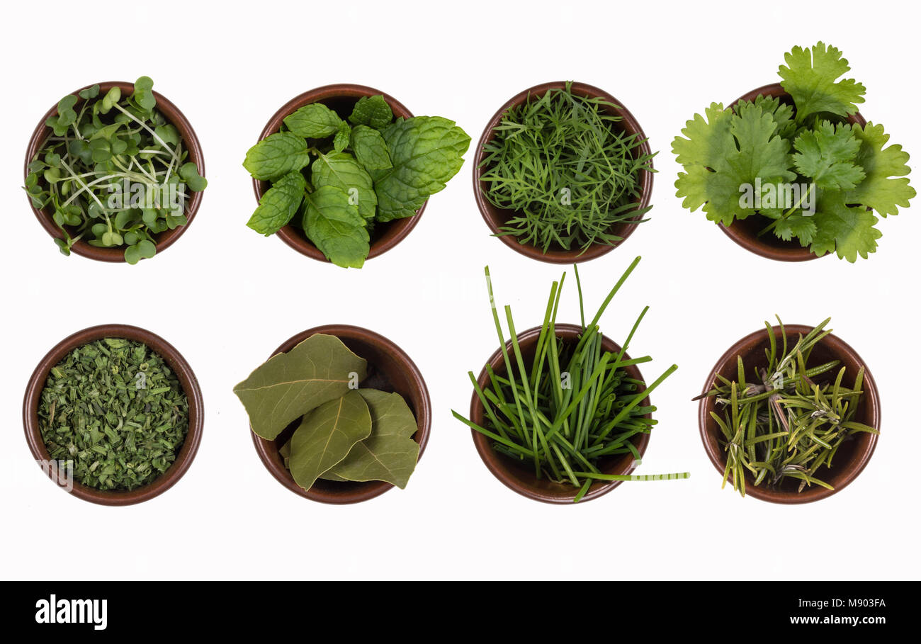 Herbs - water cress, mint, dill, parsley, bay leaves, chives and rosemary - Stock Image