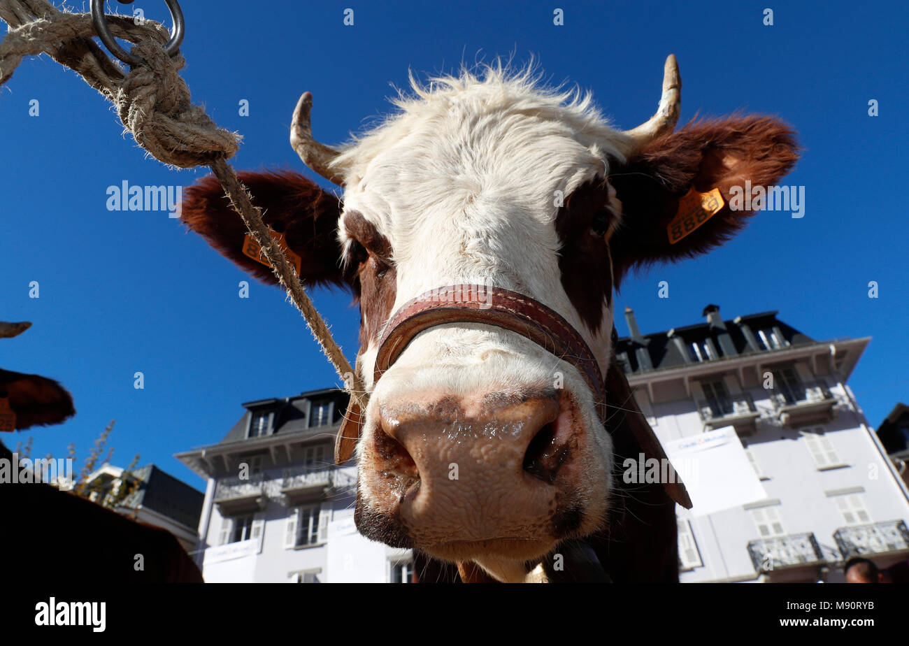 The agriculture fair (Comice Agricole) of Saint-Gervais-les-Bains. - Stock Image