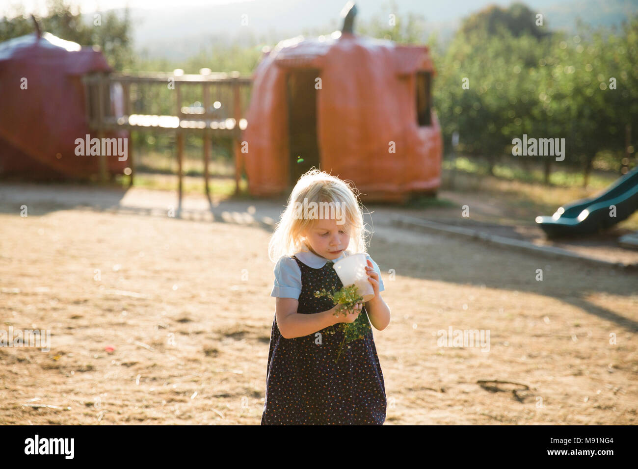 Girl drinks drink on playground at farm pumpkins fall - Stock Image