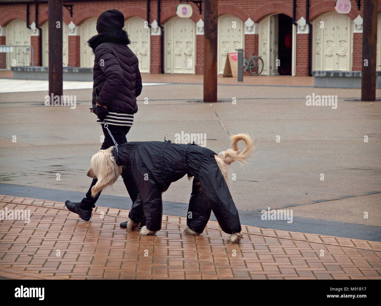 how to walk dog in rain