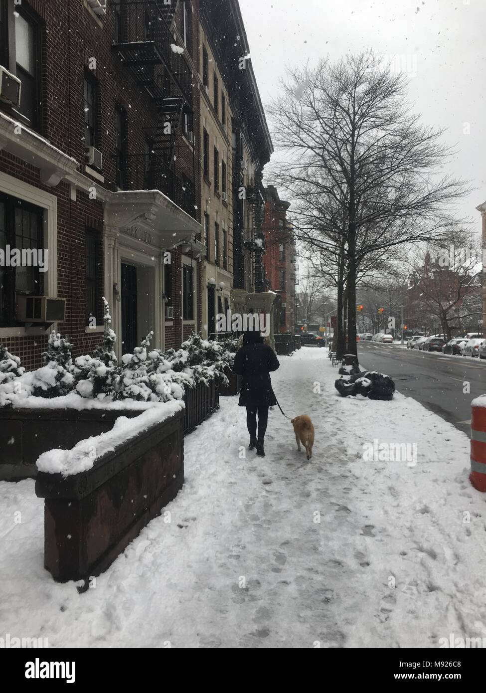 Brooklyn, USA. 21st March, 2018. Woman walking her dog in Brooklyn, NY during the Spring Nor'easter, March 21st, 2018. Credit: OneDayOneImage/Alamy Live News - Stock Image