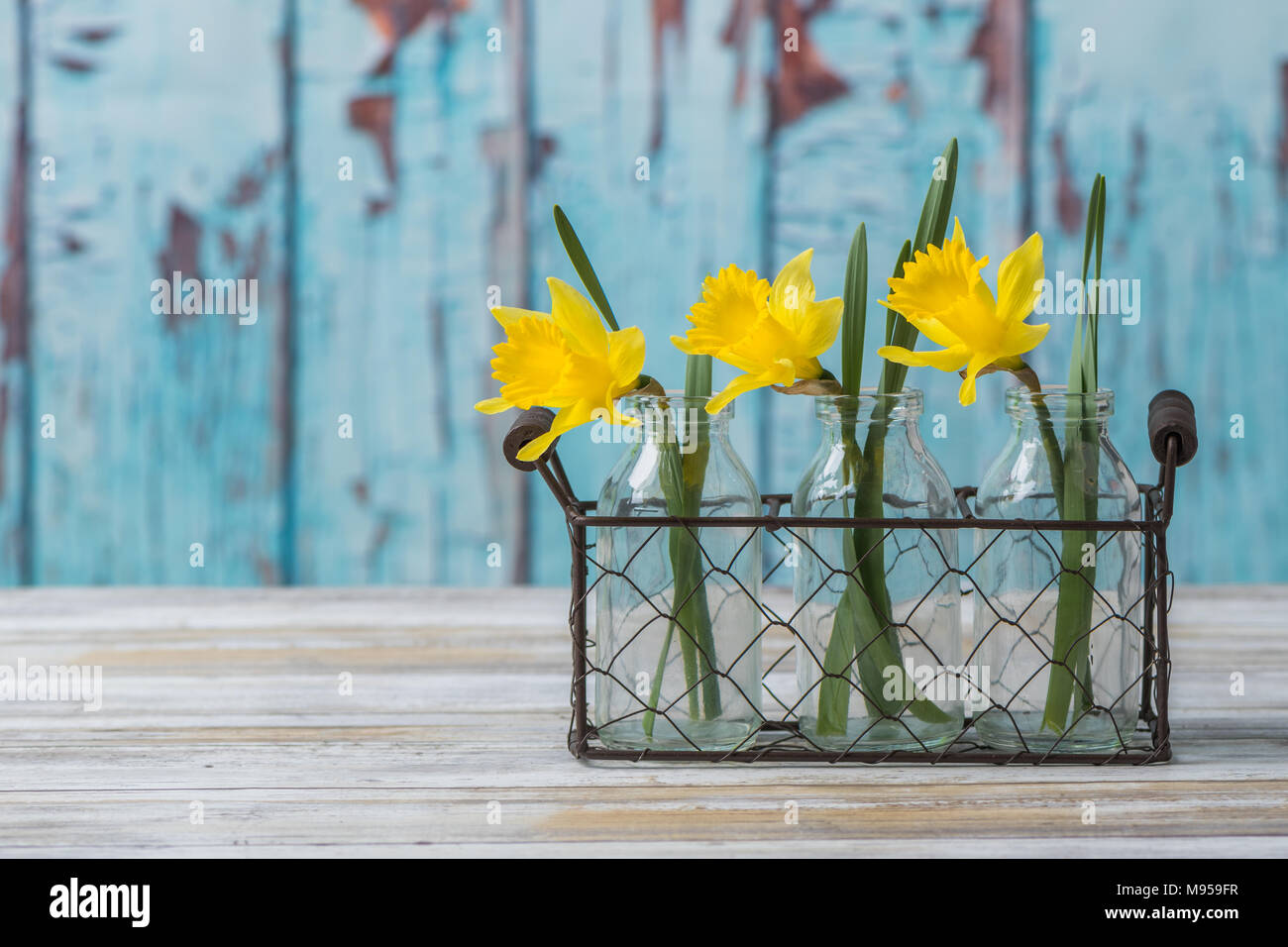 Daffodils in wire basket Stock Photo: 177752843 - Alamy