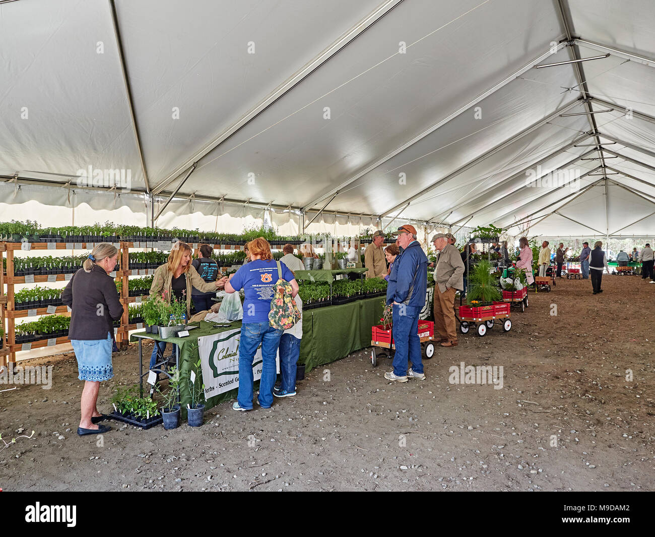 People shopping for garden plants in a large tent at the Spring plant sale in Callaway Gardens, Pine Mountain Georgia, USA. - Stock Image