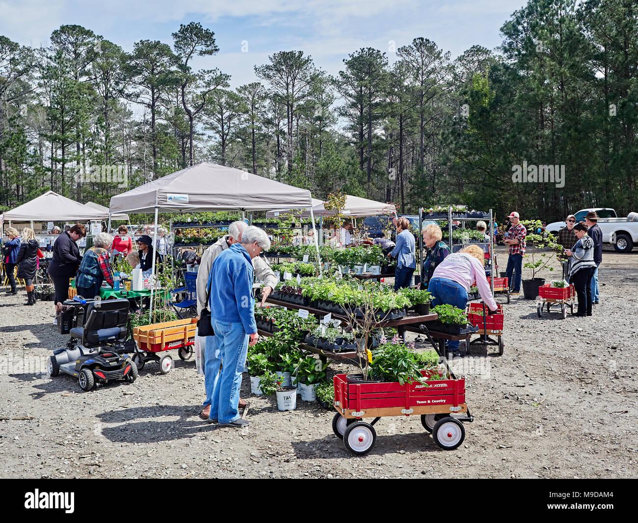 Senior elderly, mature couple shopping for garden plants at the outdoor Spring plant sale in Callaway Gardens, Pine Mountain Georgia, USA. - Stock Image
