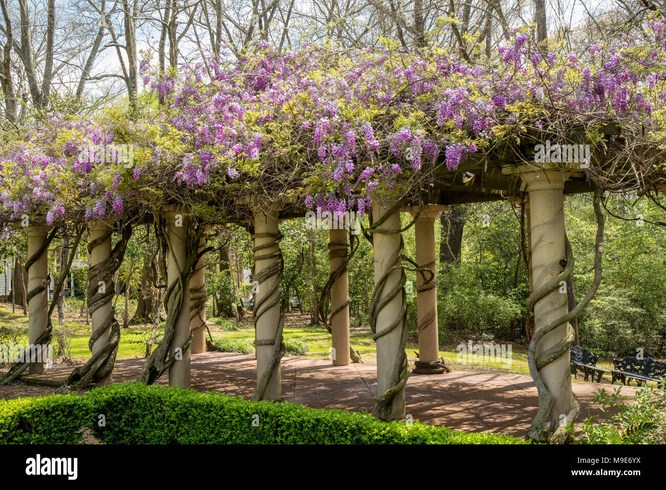 Wisteria Arbor At Monmouth Historic Inn In Natchez Mississippi