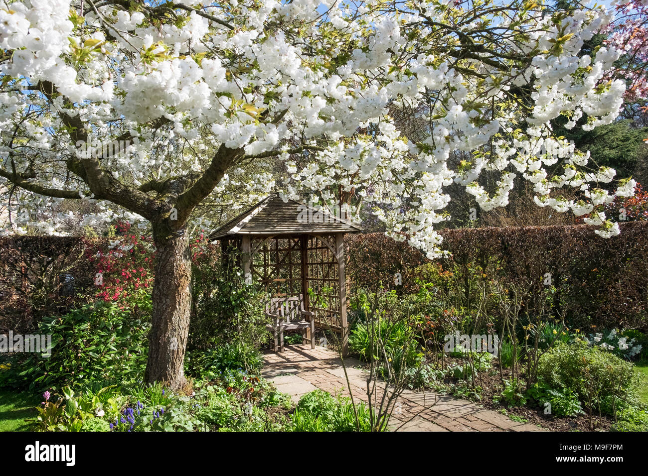 Spring garden with flowering tree and arbour, East Midlands, England ...