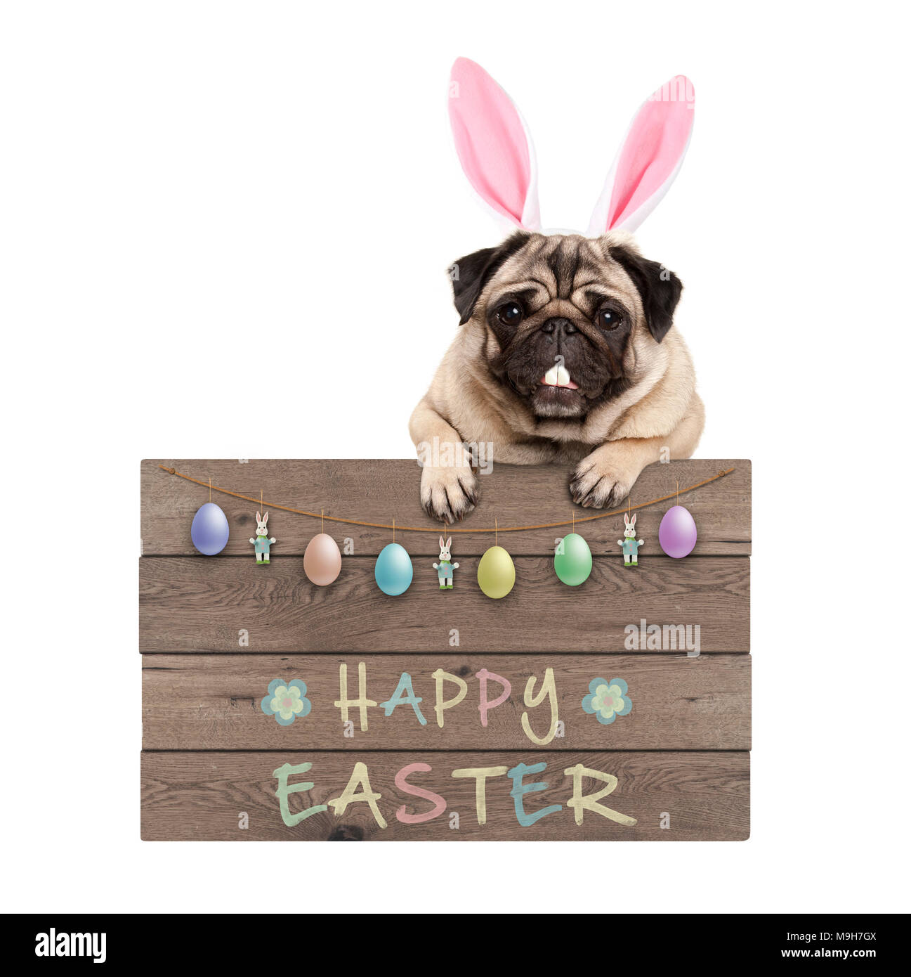 Easter bunny pug dog hanging on wooden sign with text happy easter and pastel decoration, isolated on white background - Stock Image