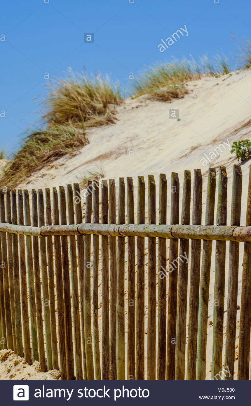 Sharp wooden fence against sandy beach which is blurred. - Stock Image