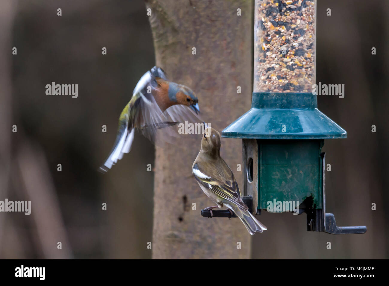 Rutland Water, Oakham. 26th Mar, 2018. Busy sunny day on the reserve with Blue skys  for visitors to the Lynton center and nature reserve, visitors enjoy live cam of the Ospreys after their  return from wintering in Africa. Clifford Norton Alamy Live News. Credit: Clifford Norton/Alamy Live News - Stock Image