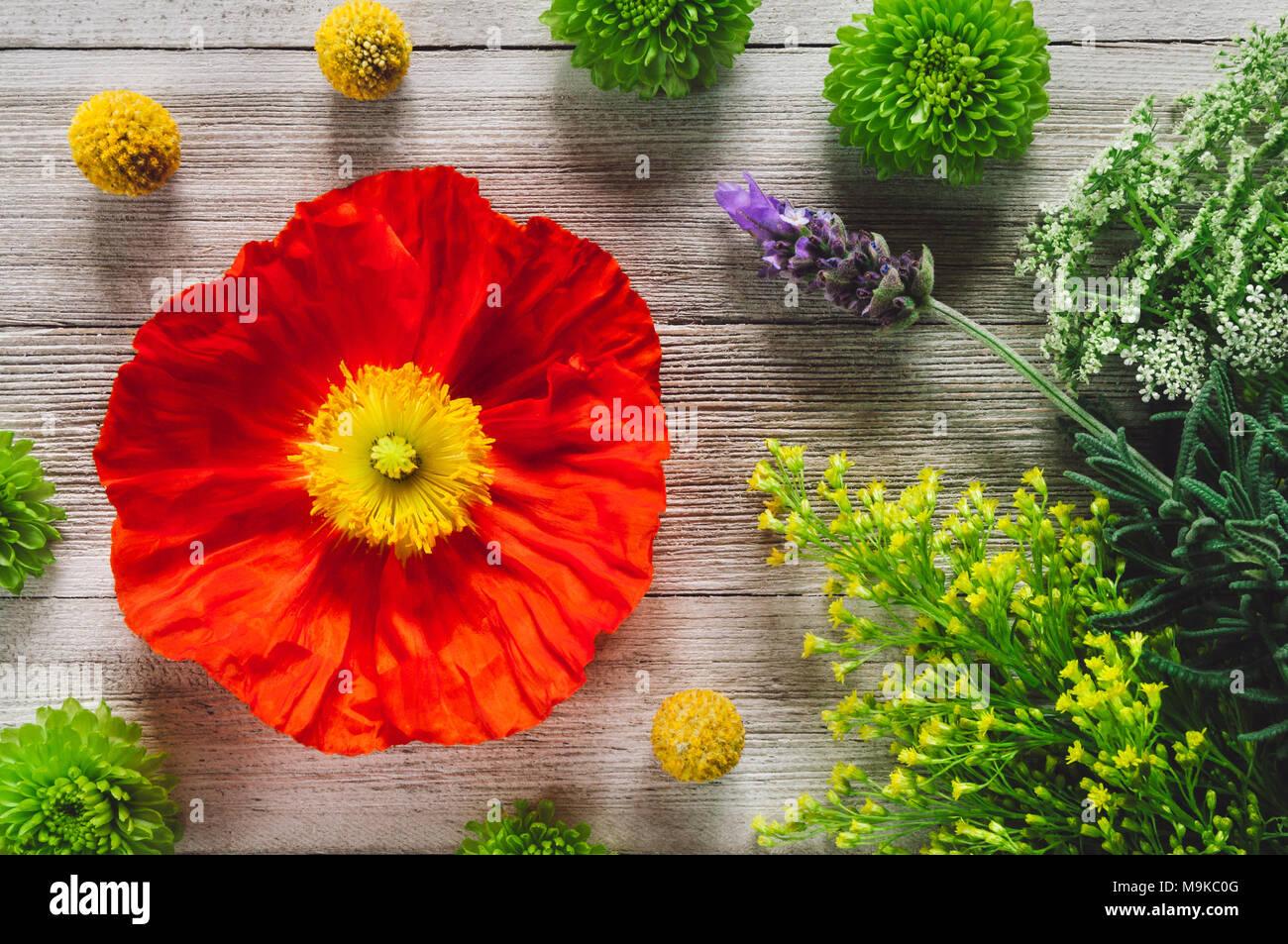 Arranged Flowers on White Table including Poppy, Lavender, Chrysanthemum and Craspedia - Stock Image