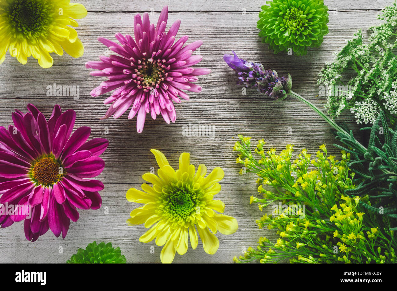 Spring Botanicals on White Rustic Table including Chrysanthemum and Lavender - Stock Image