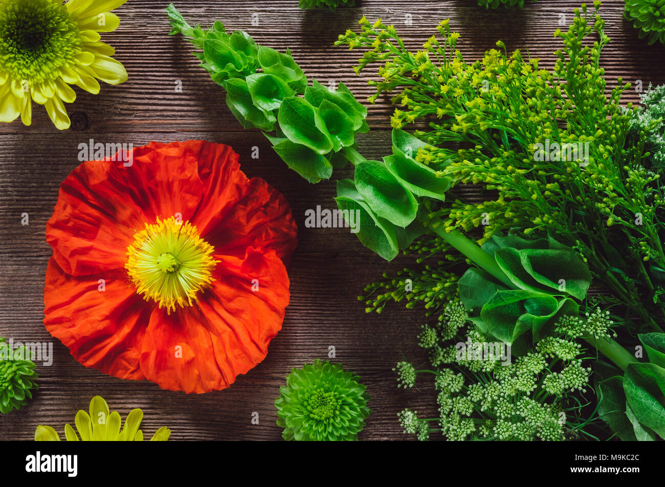 Flowering Plants Arranged on Wooden Table including, Poppy, Chrysanthemum, and Moluccella laevis - Stock Image