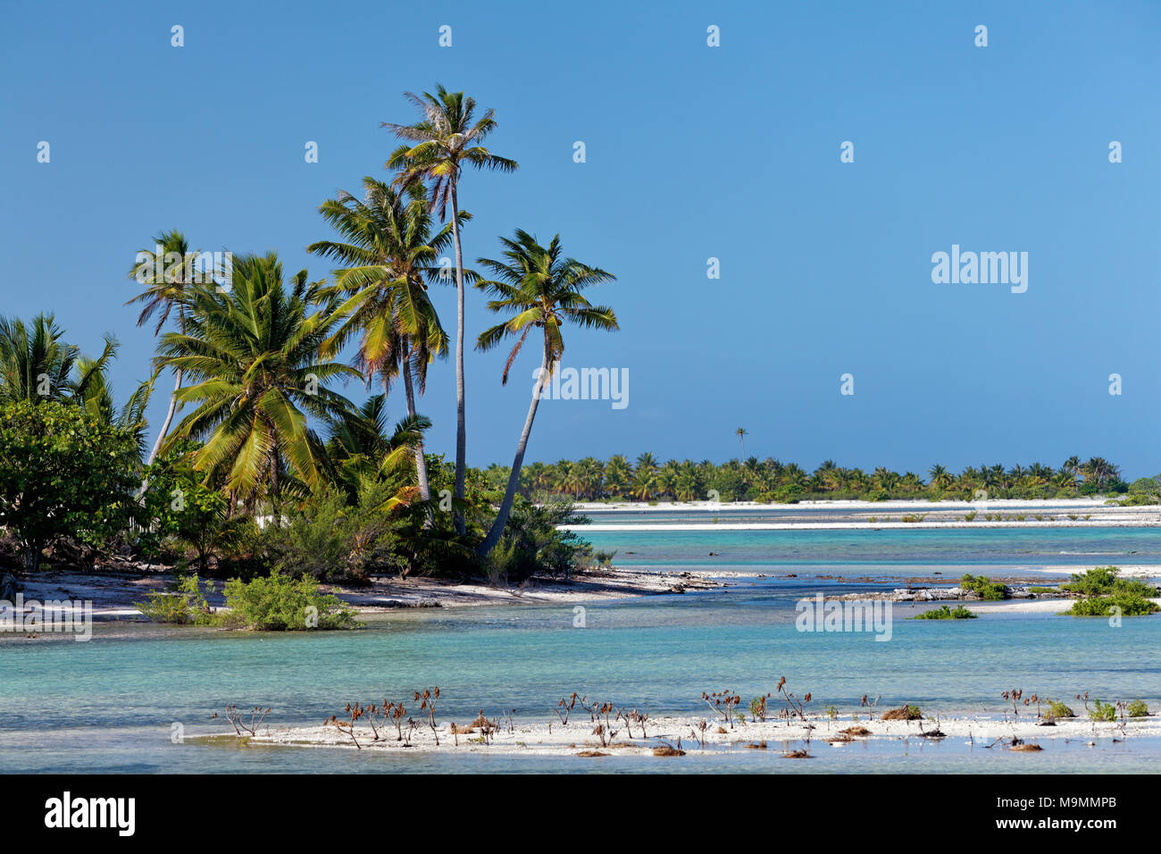 Island landscape with palm trees, lagoon, Tikehau Atoll, Tuamotu archipelago, society islands, Windward Islands - Stock Image