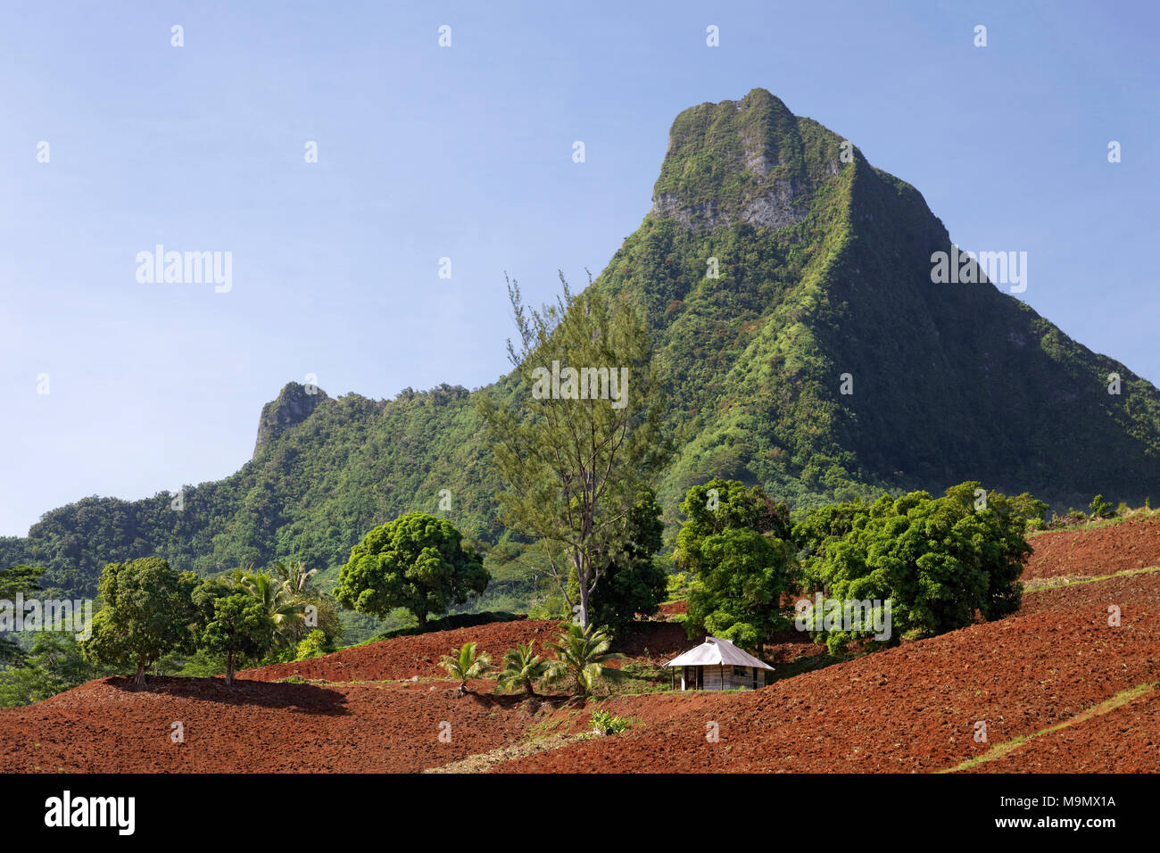 Agricultural land, arable land, cultivation, in the mountainous highlands, Moorea, society islands, Windward Islands - Stock Image