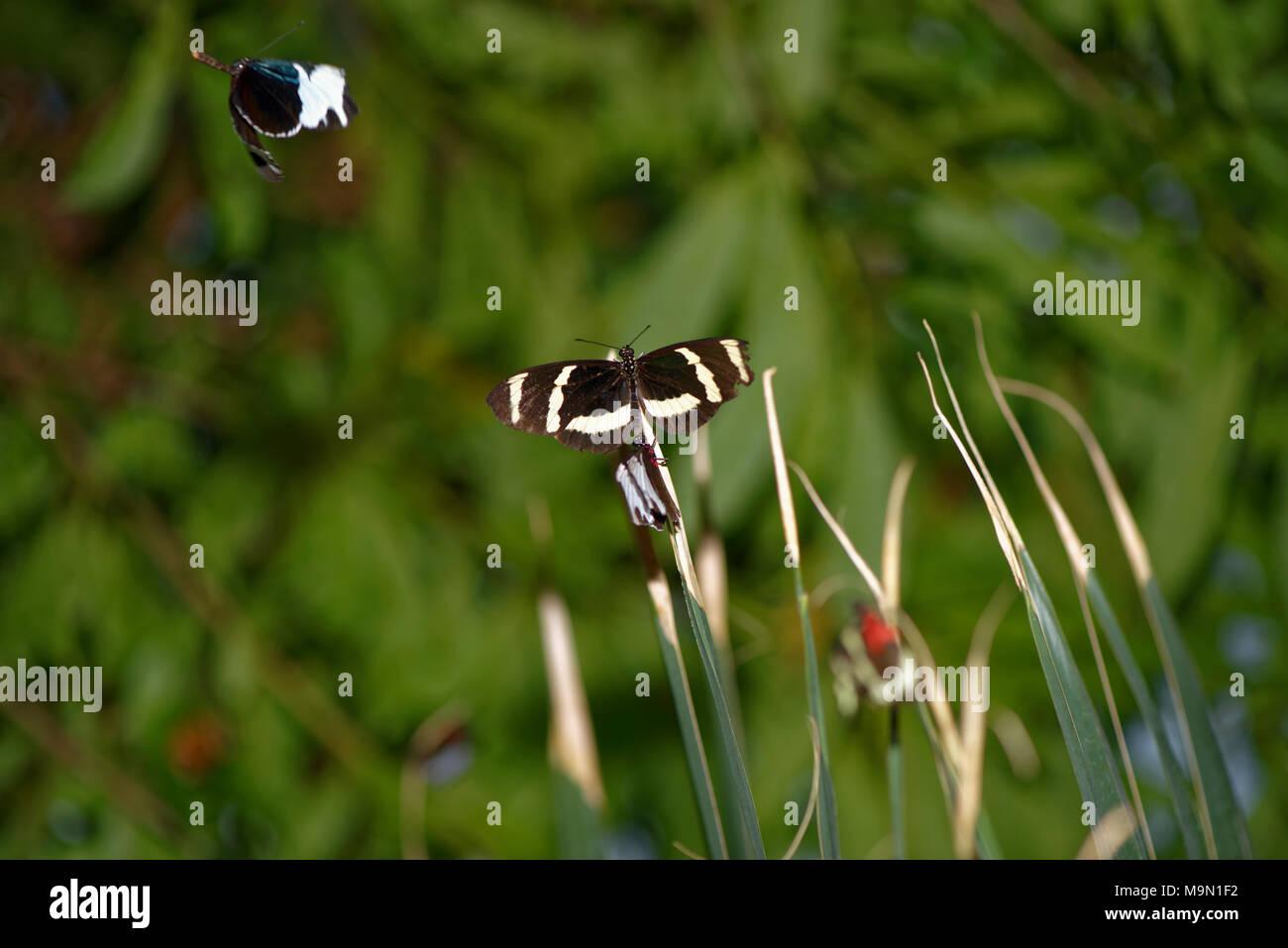 Diurnal Butterfly In Herrenhausen Gardens Hanover Germany