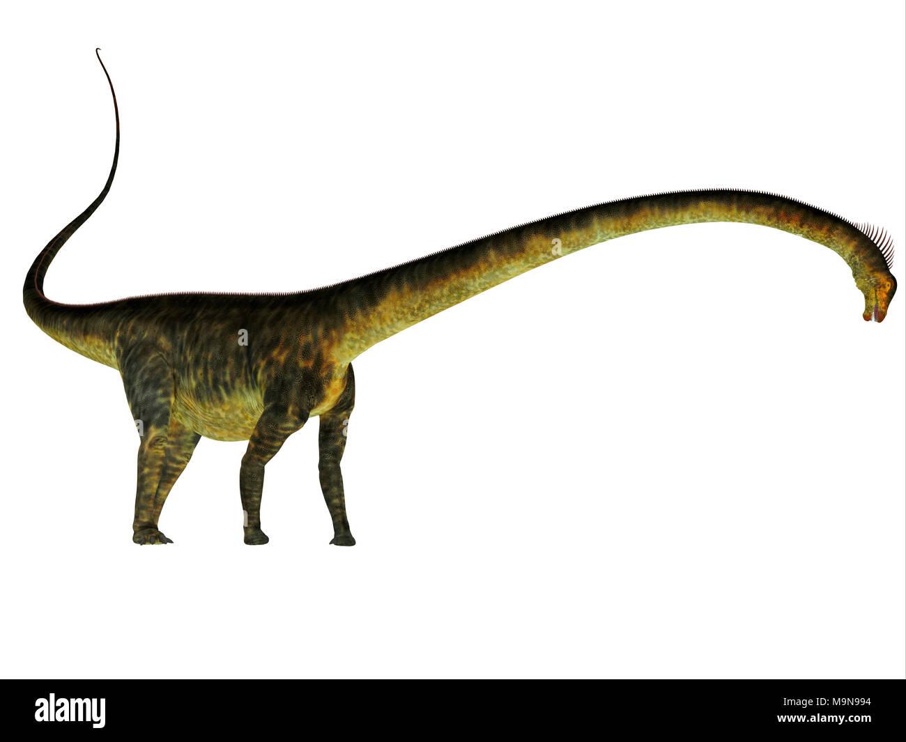 Barosaurus Dinosaur Side Profile - Barosaurus was a herbivorous sauropod dinosaur that lived in Utah and South Dakota, USA in the Jurassic Period. - Stock Image