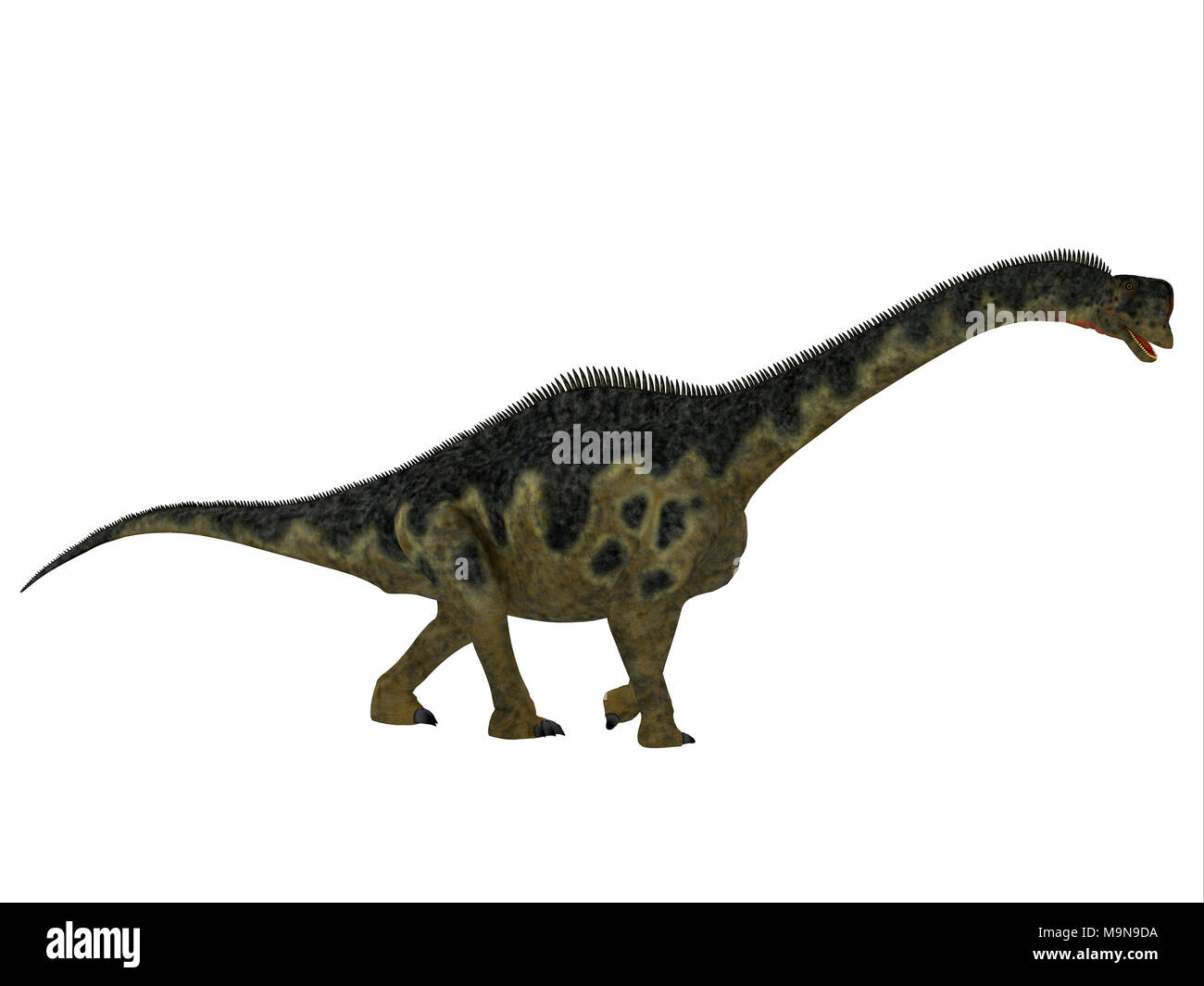Europasaurus Dinosaur Side Profile - Europasaurus was a sauropod herbivorous dinosaur that lived in Germany, Europe during the Jurassic Period. - Stock Image
