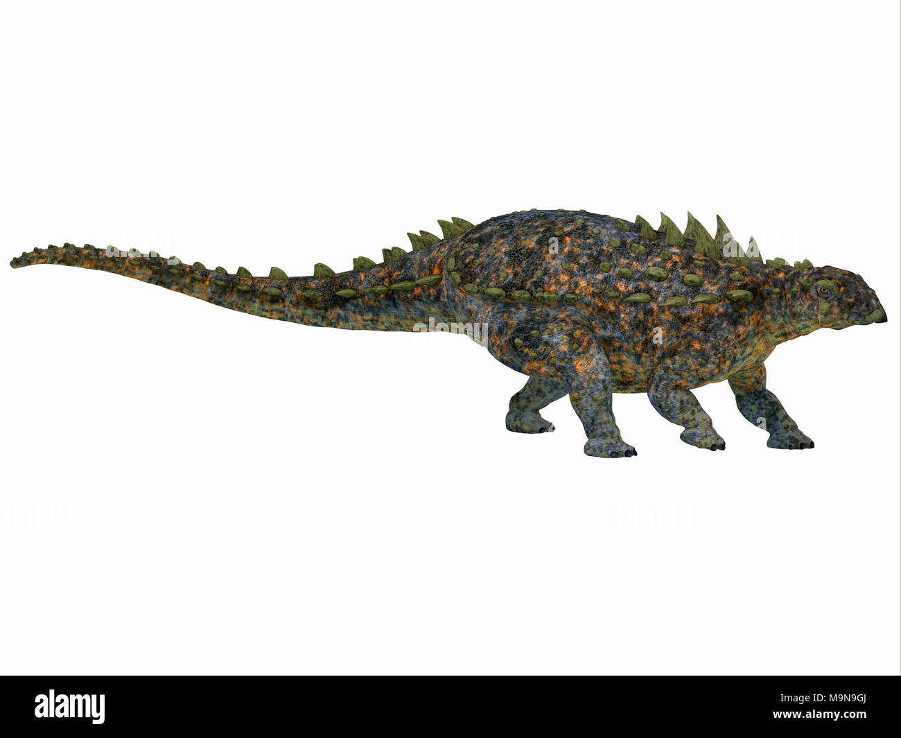 Polacanthus Dinosaur Side Profile - Polacanthus was an armored herbivorous dinosaur that lived in Europe during the Cretaceous Period. - Stock Image