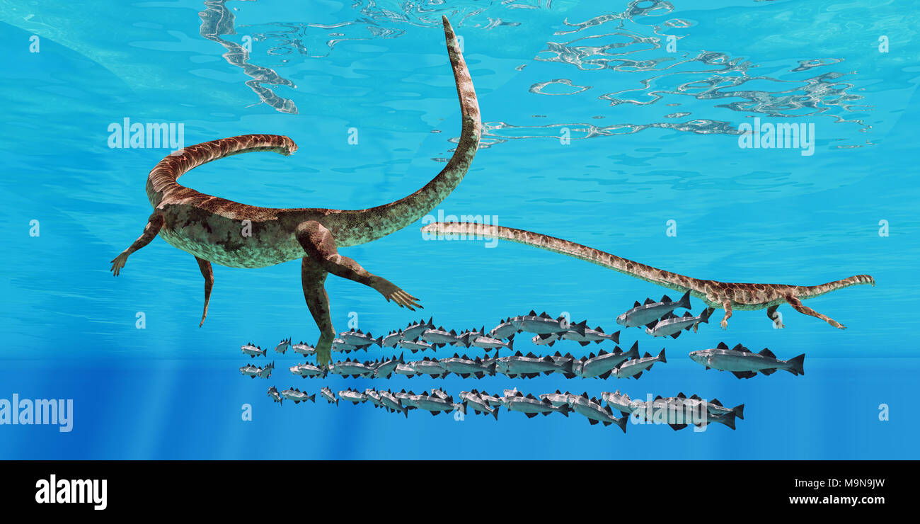 Tanystropheus and Cod School - Two Tanystropheus marine reptiles surround a school of Cod fish in the seas of the Triassic Period. - Stock Image